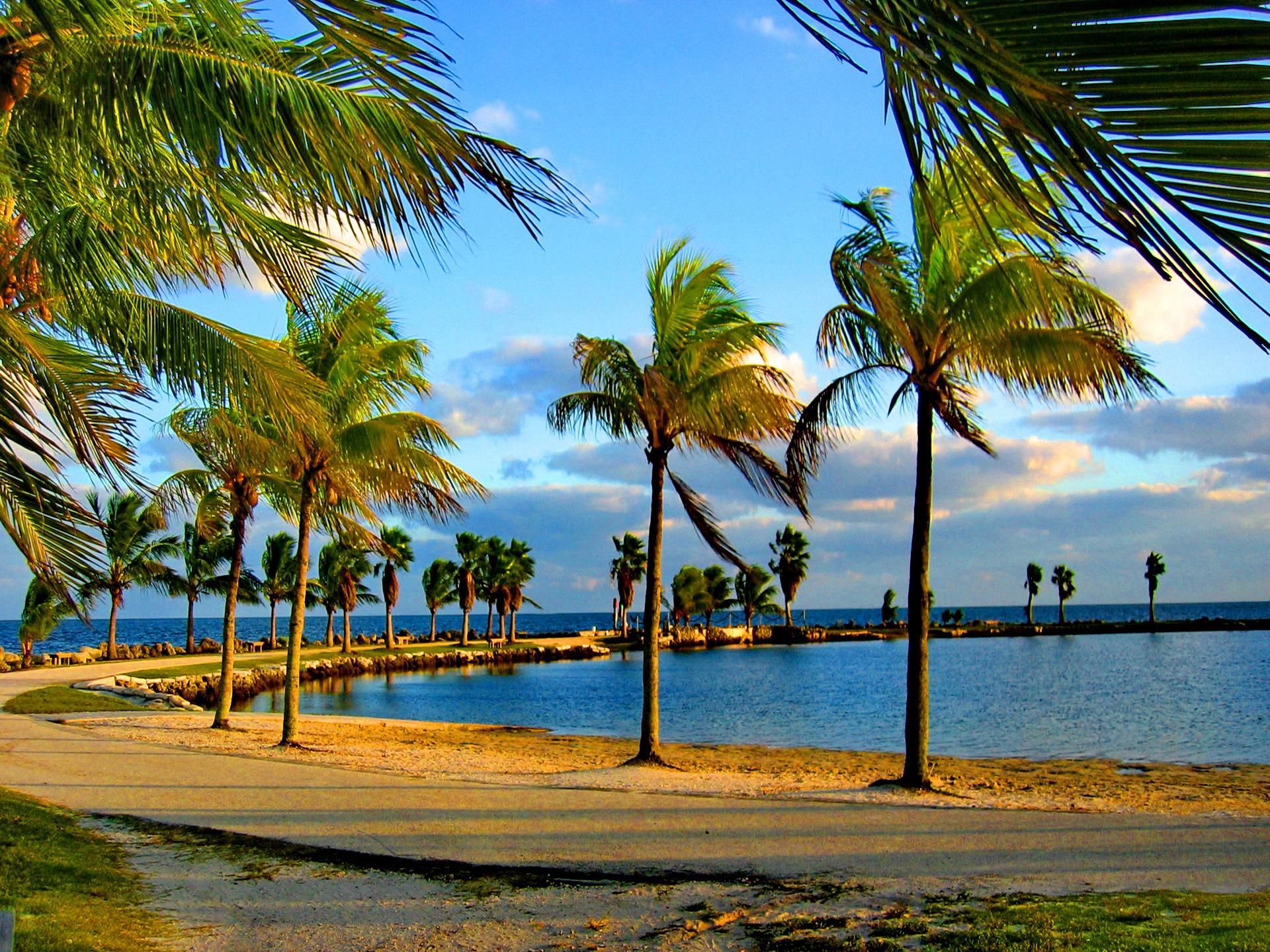 free palm tree wallpapers desktop