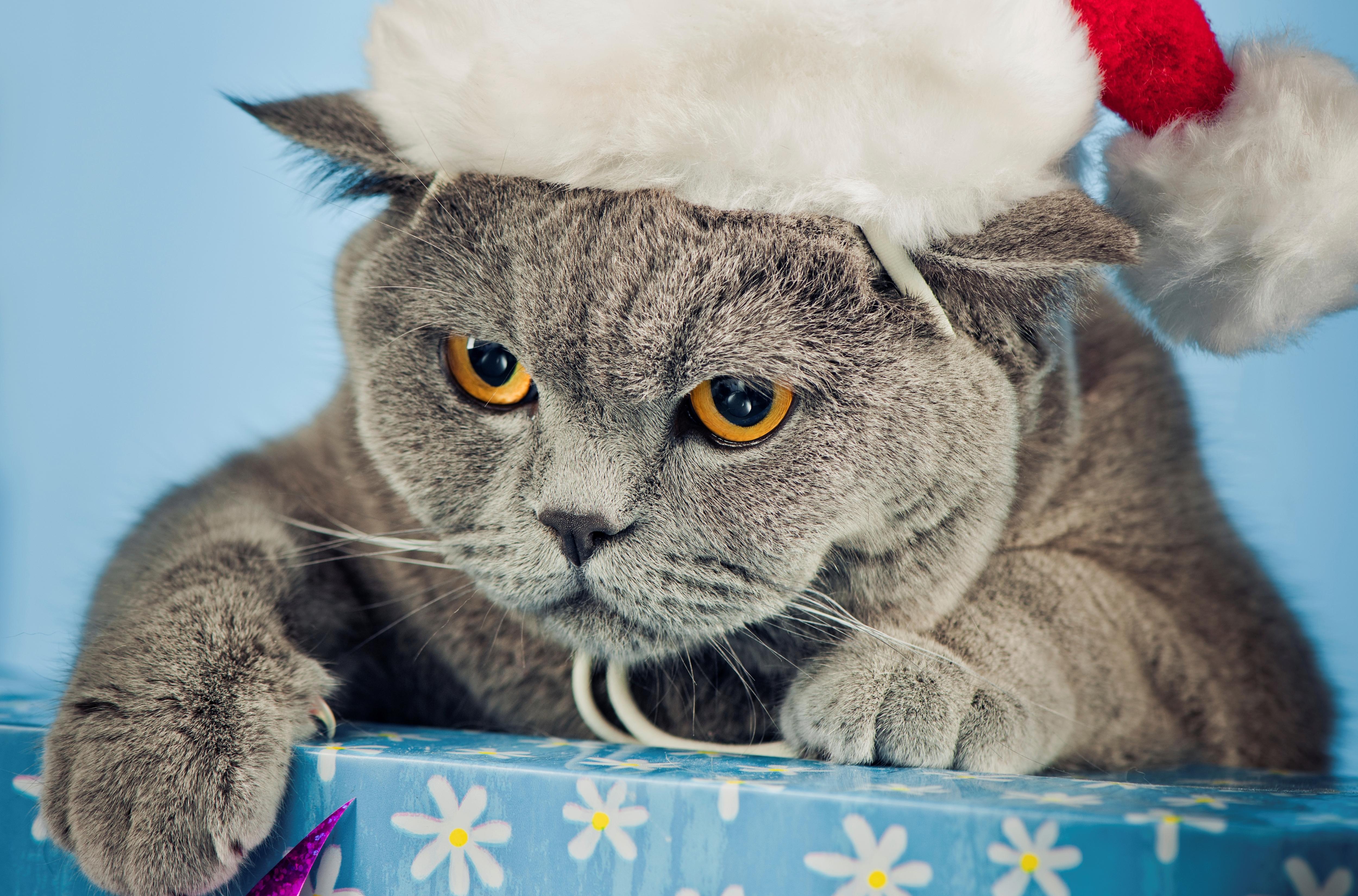 случае фото котиков в шапочках новогодних ассортимент, отзывы