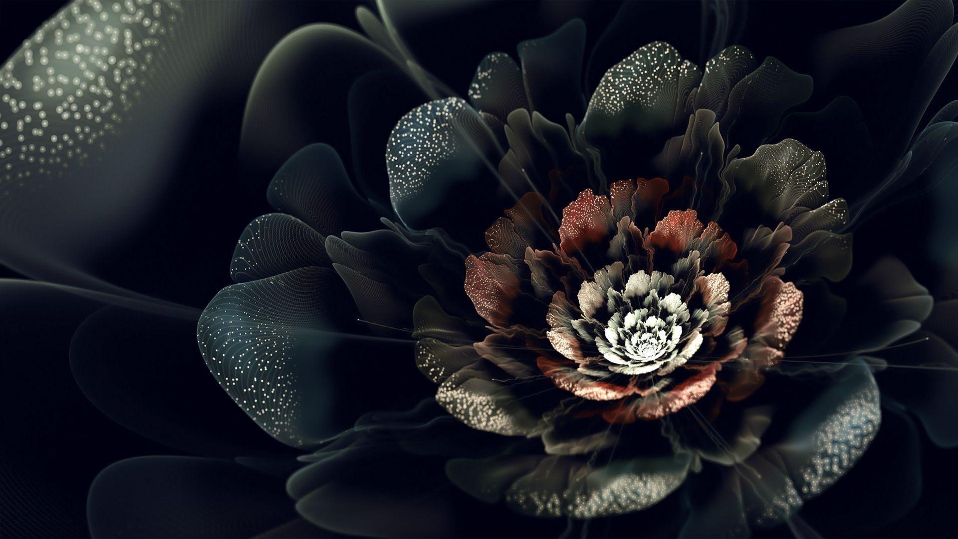 фото цветов на черном фоне высокого качества коем случае нельзя