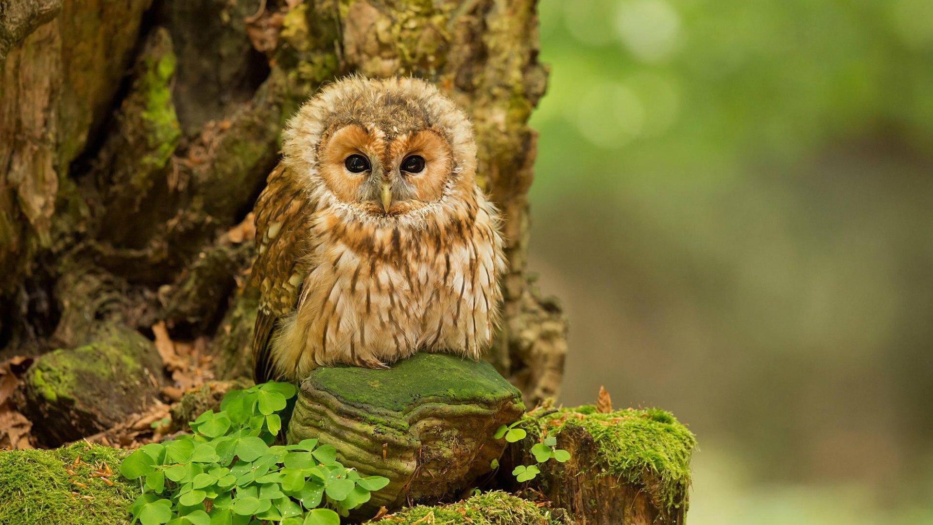 Owl Glasses Images Stock Photos amp Vectors  Shutterstock