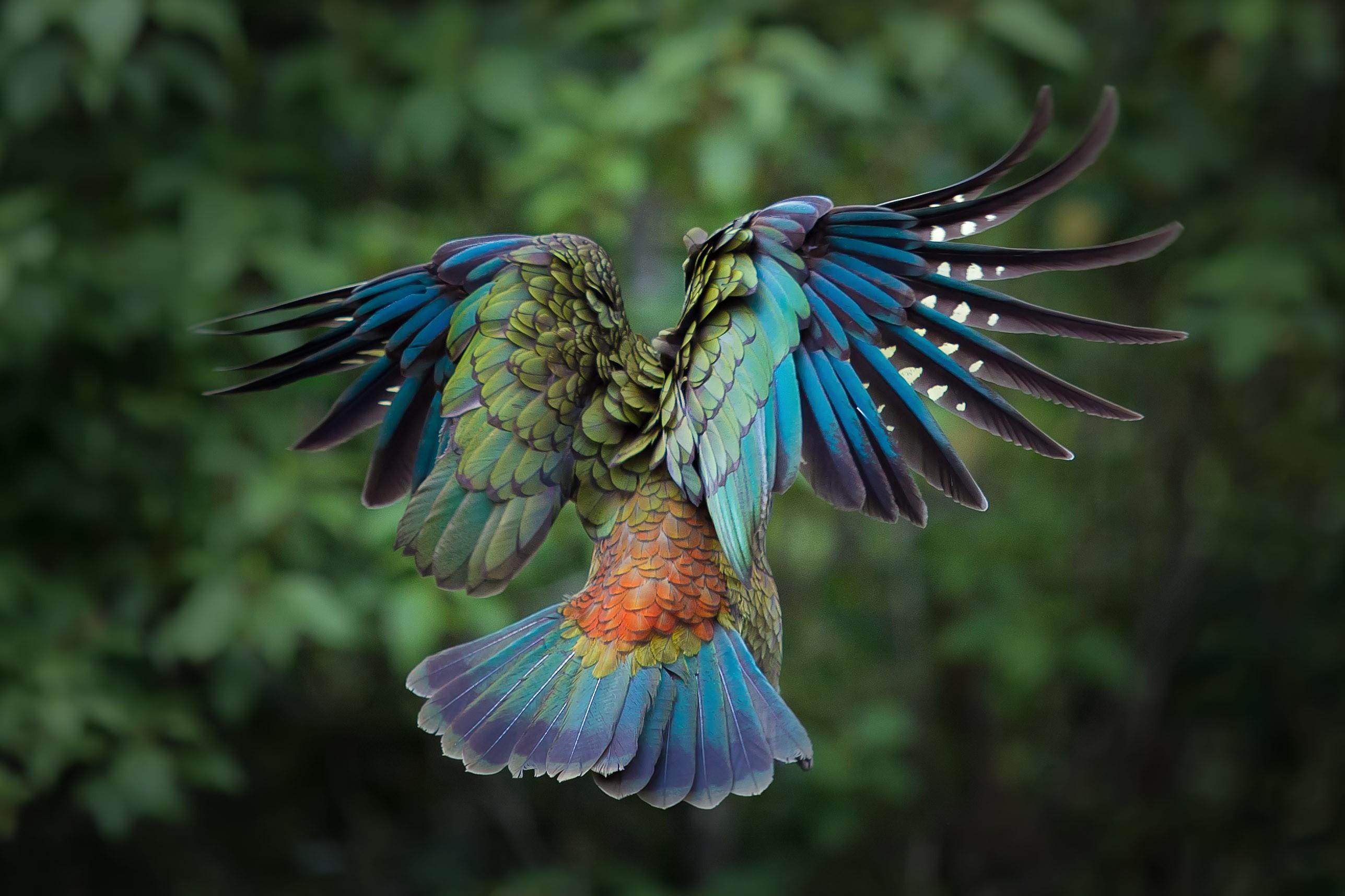 Colorful Bird Flying | www.pixshark.com - Images Galleries ...