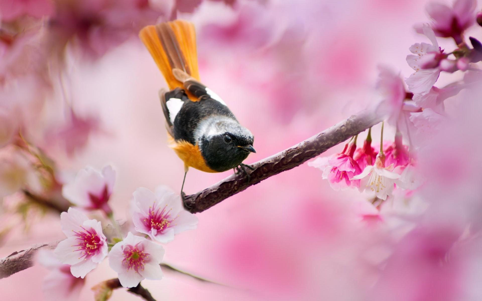 Обои для рабочего стола птички весной
