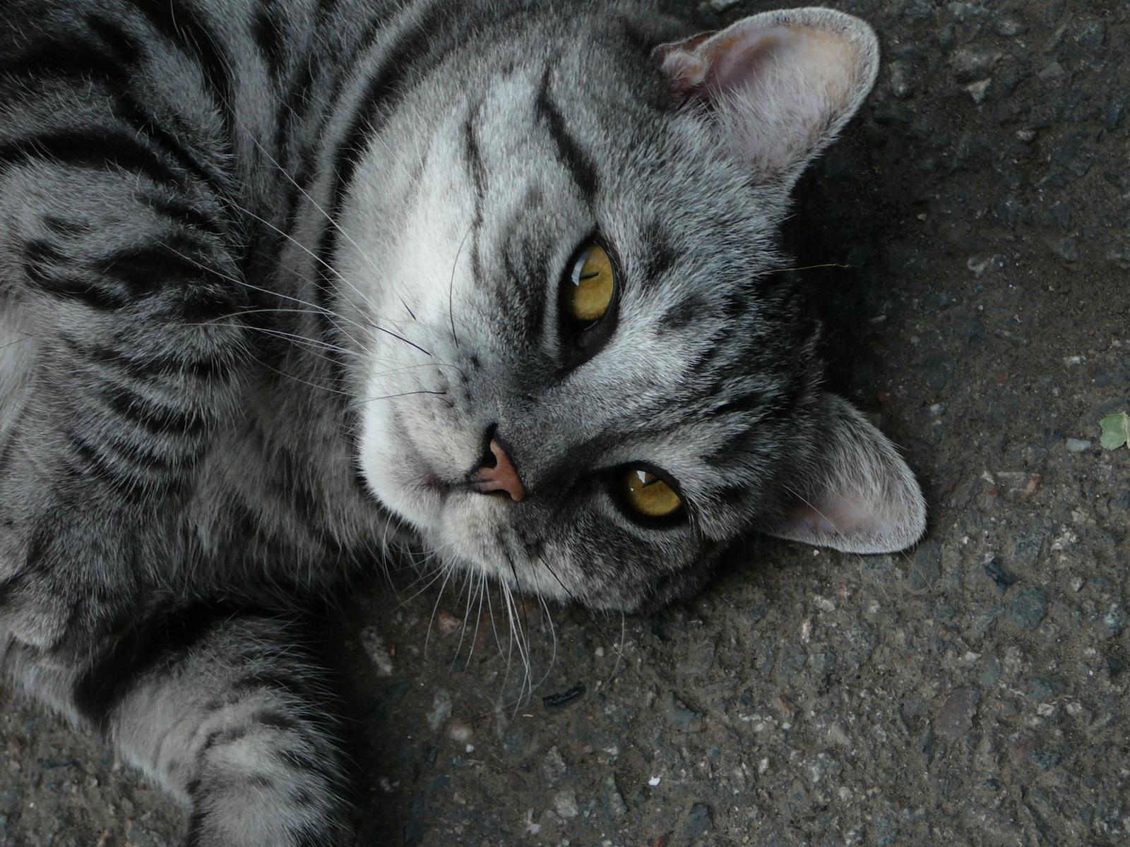 kittens for sale colorado springs