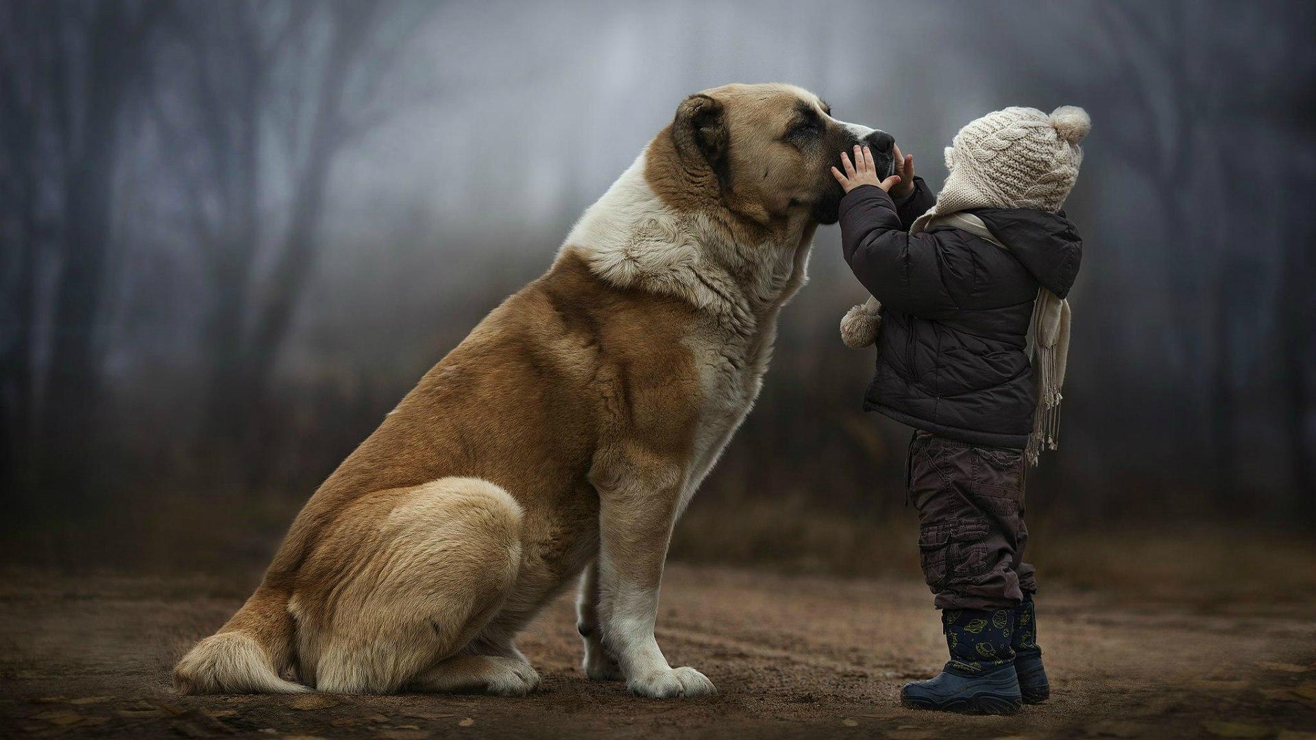 Výsledok vyhľadávania obrázkov pre dopyt child with dog