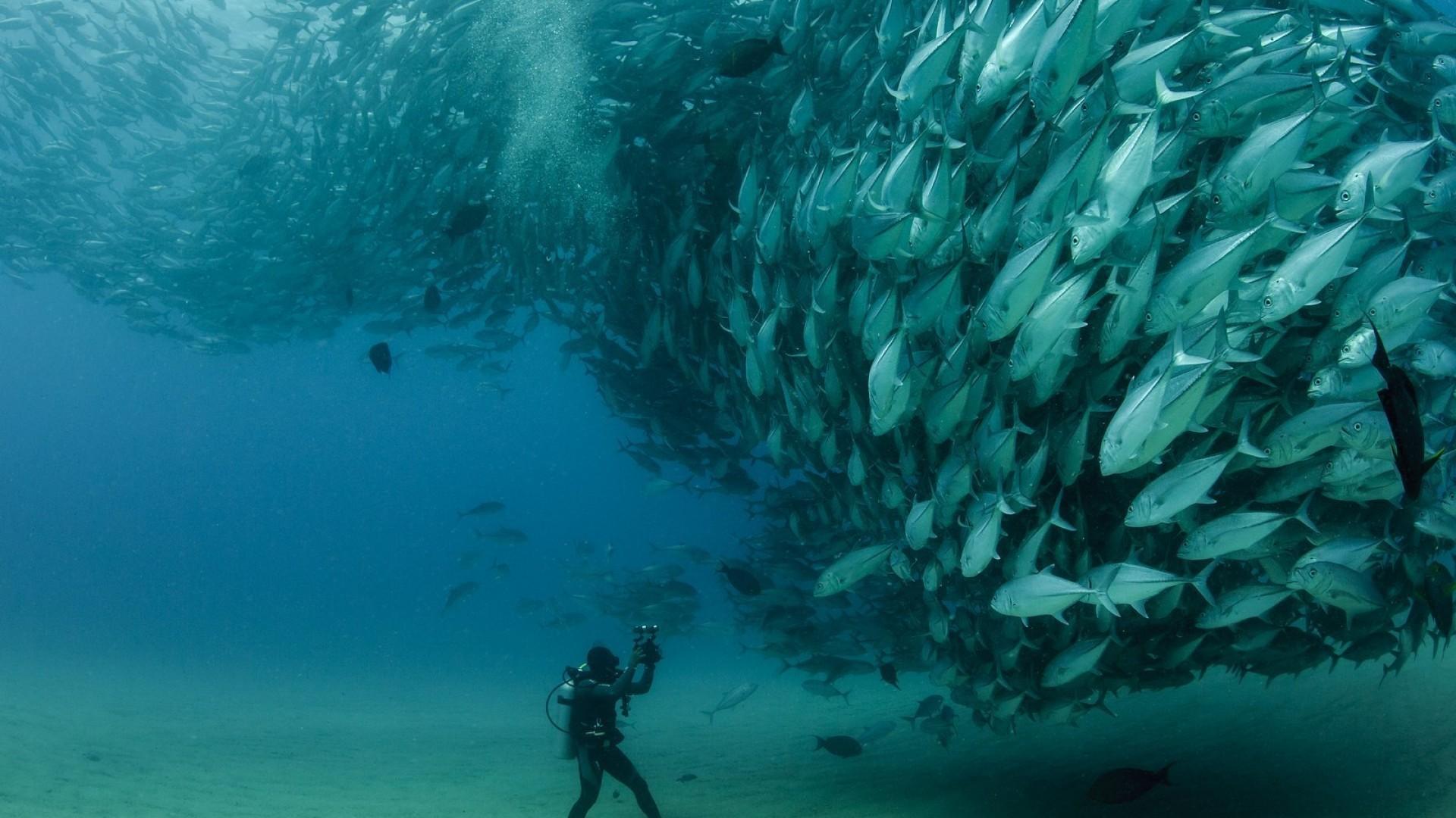 Порно смотреть онлайн моряки привыкли называть рифовый узел 130