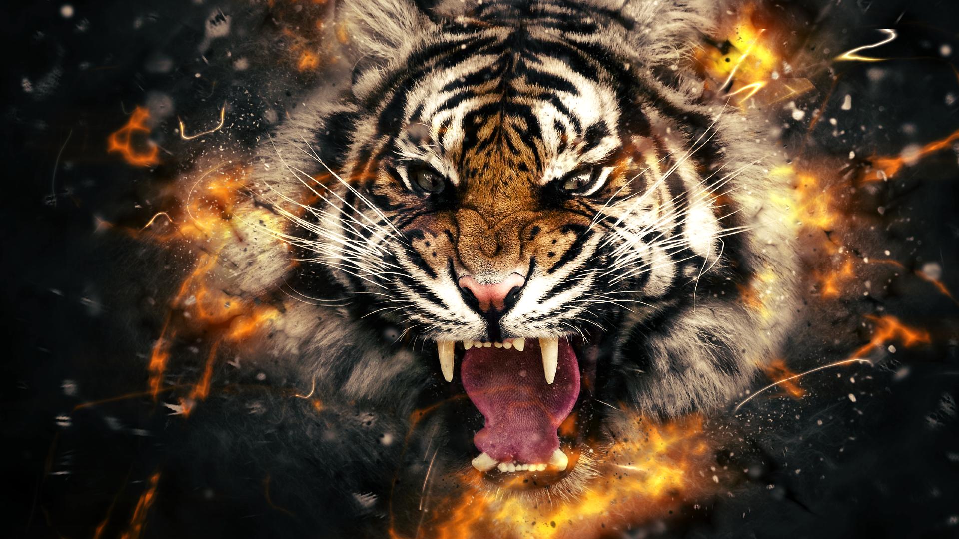 Troup High Tigers Troup Pinterest Animal wallpaper Bengal