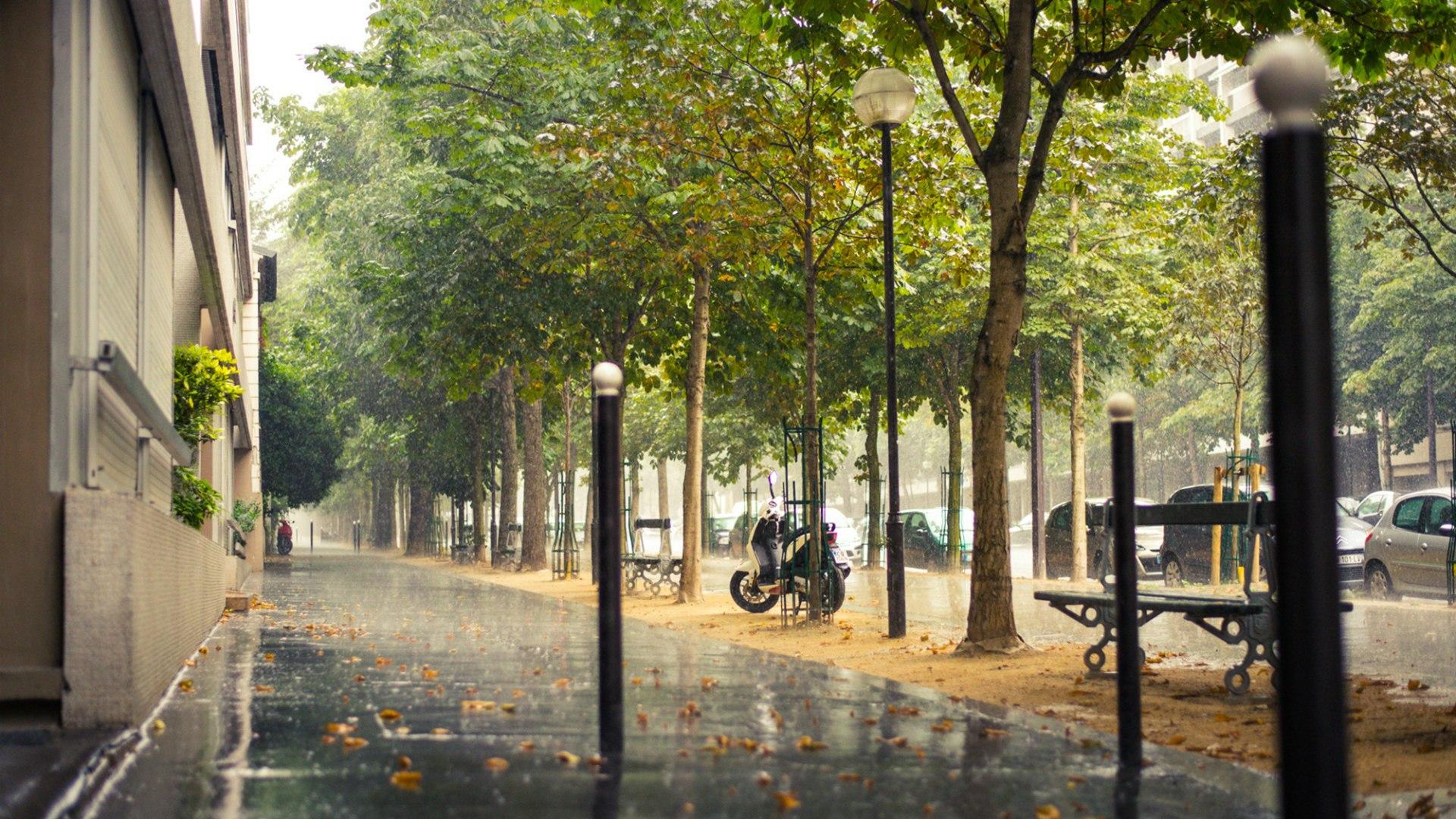 Street Of Paris In The Rain