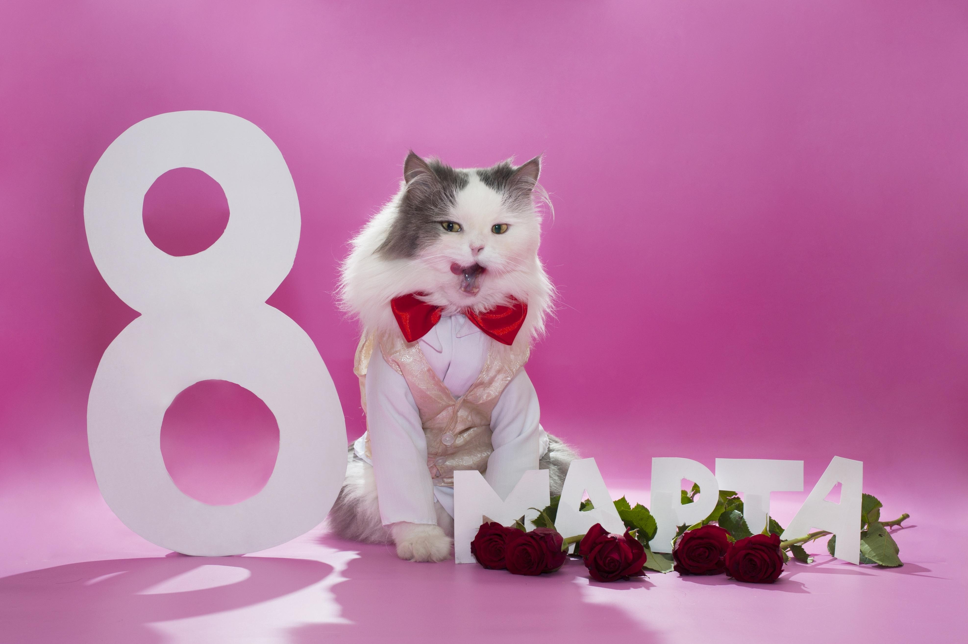 Надписями про, с 8 марта открытка с кошкой