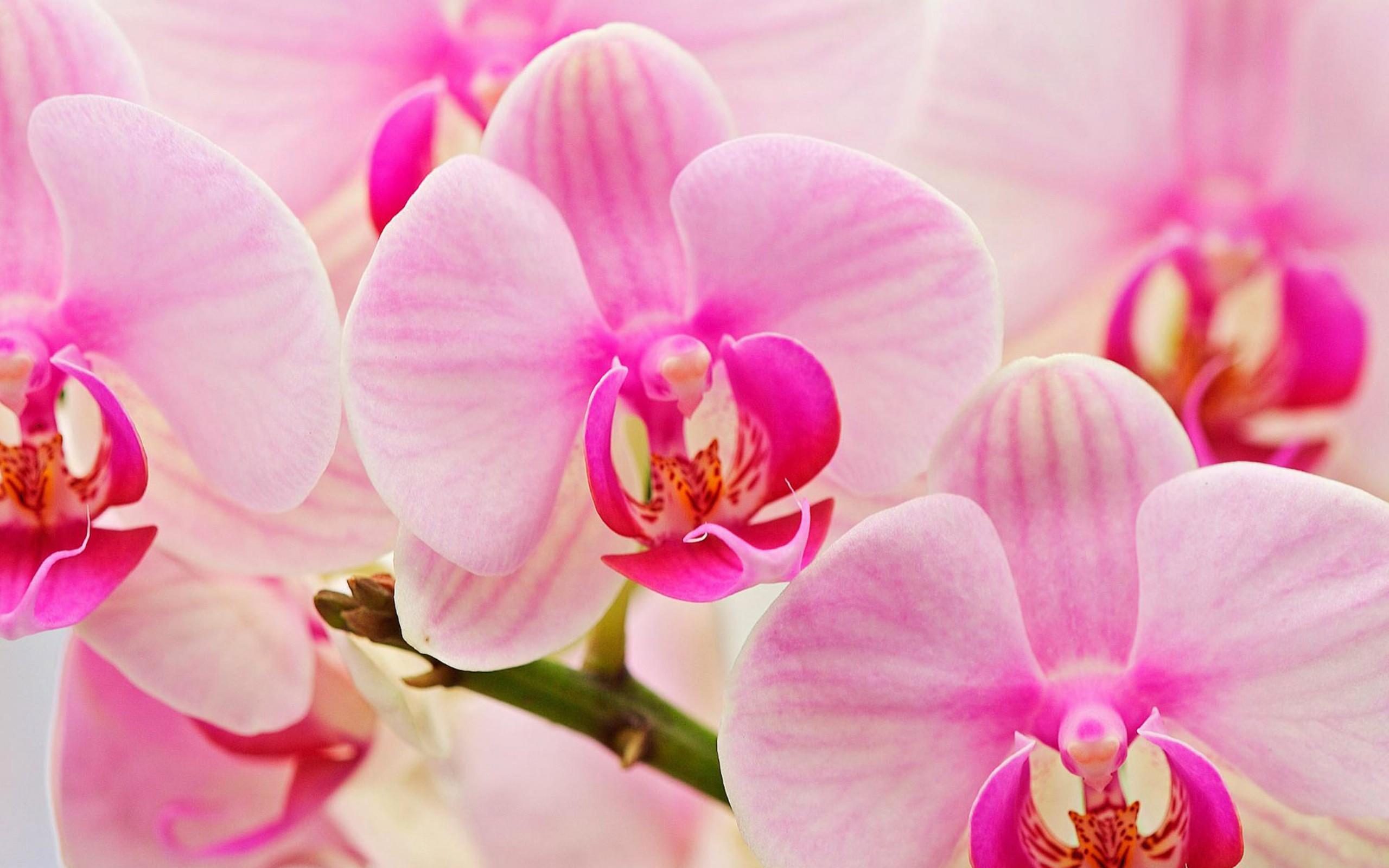 Дню, картинки орхидей на рабочий стол красивые большие на весь экран