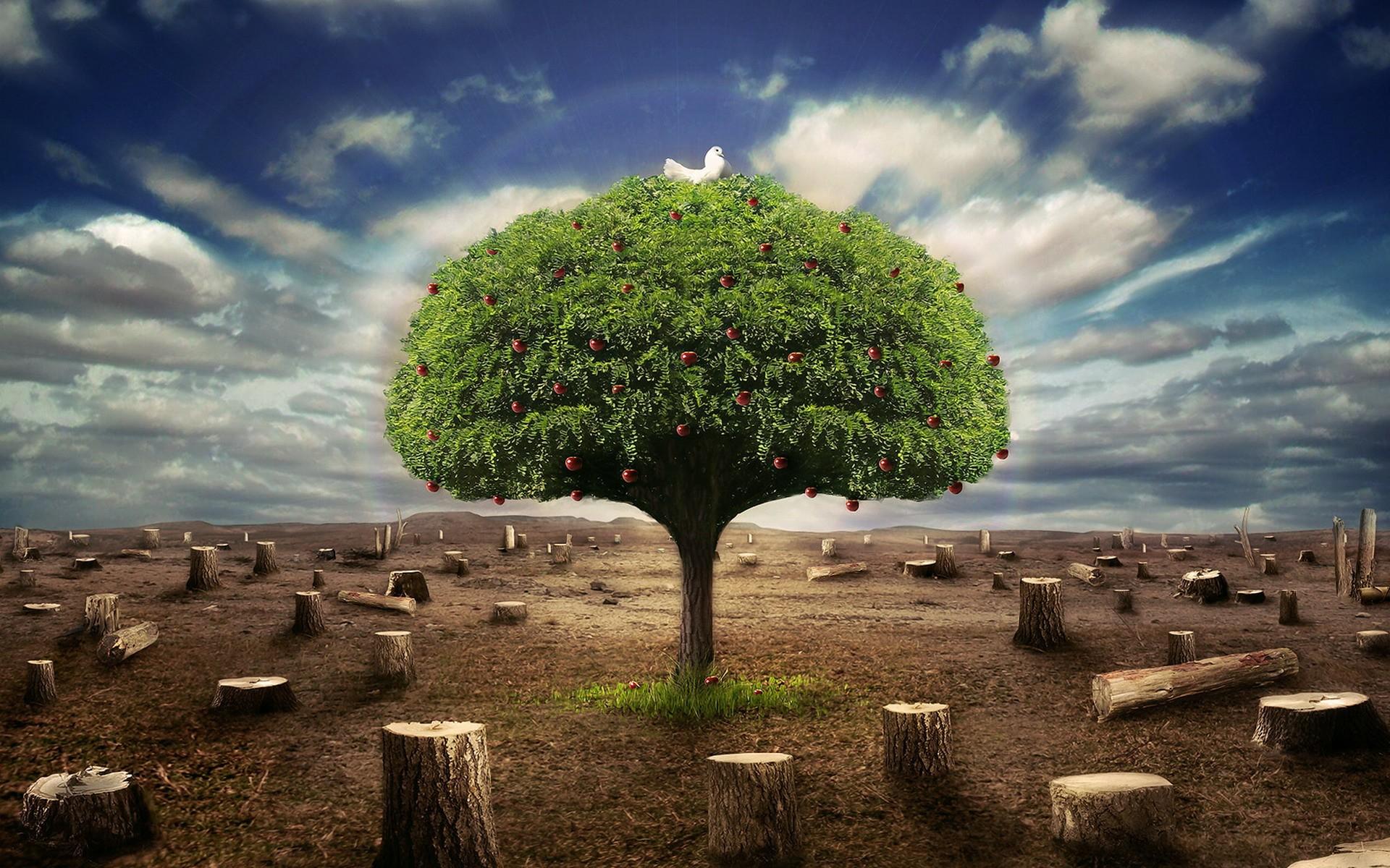лежащее дерево картинки красавицы того времени