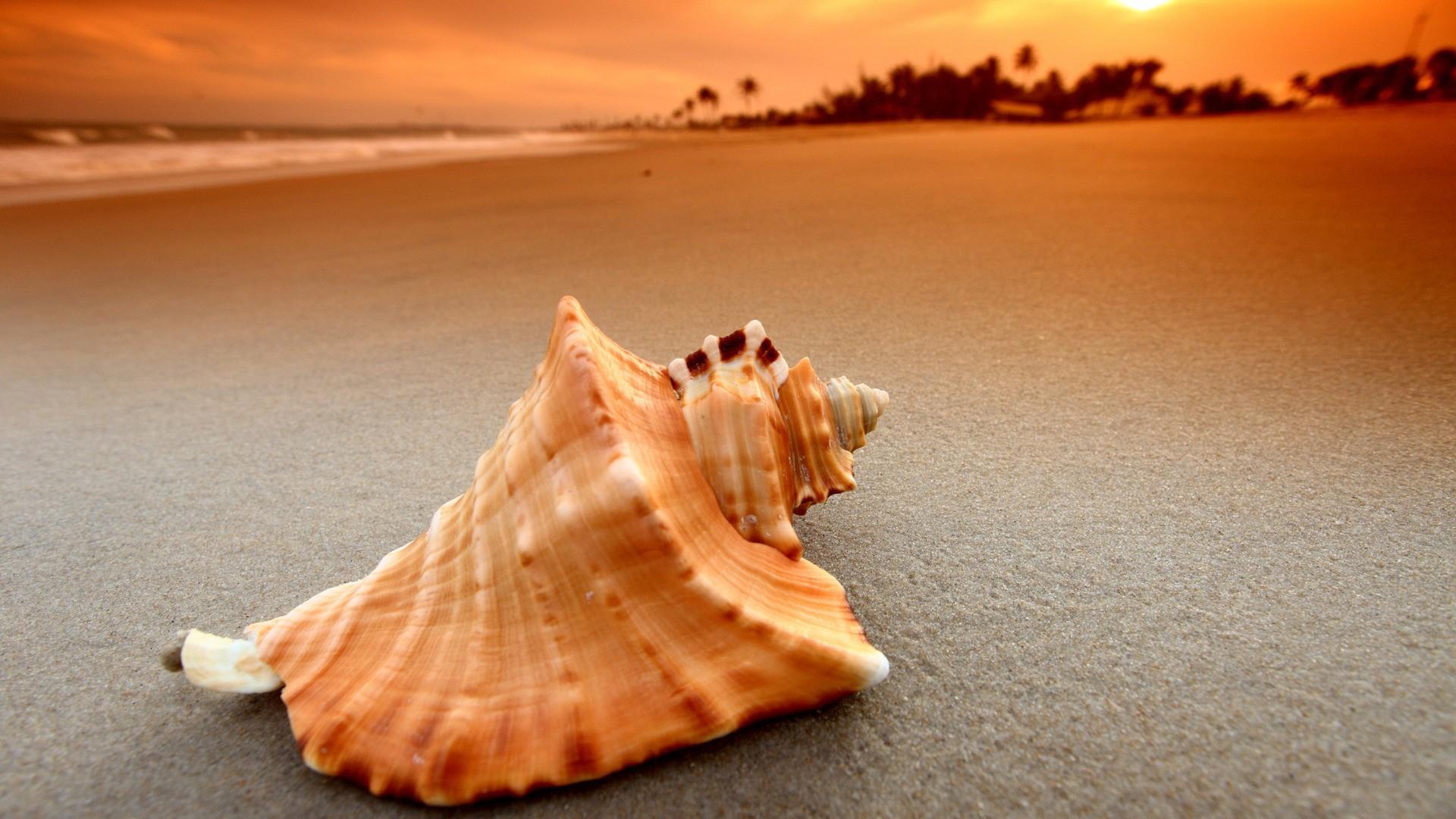 Картинки ракушки на песке