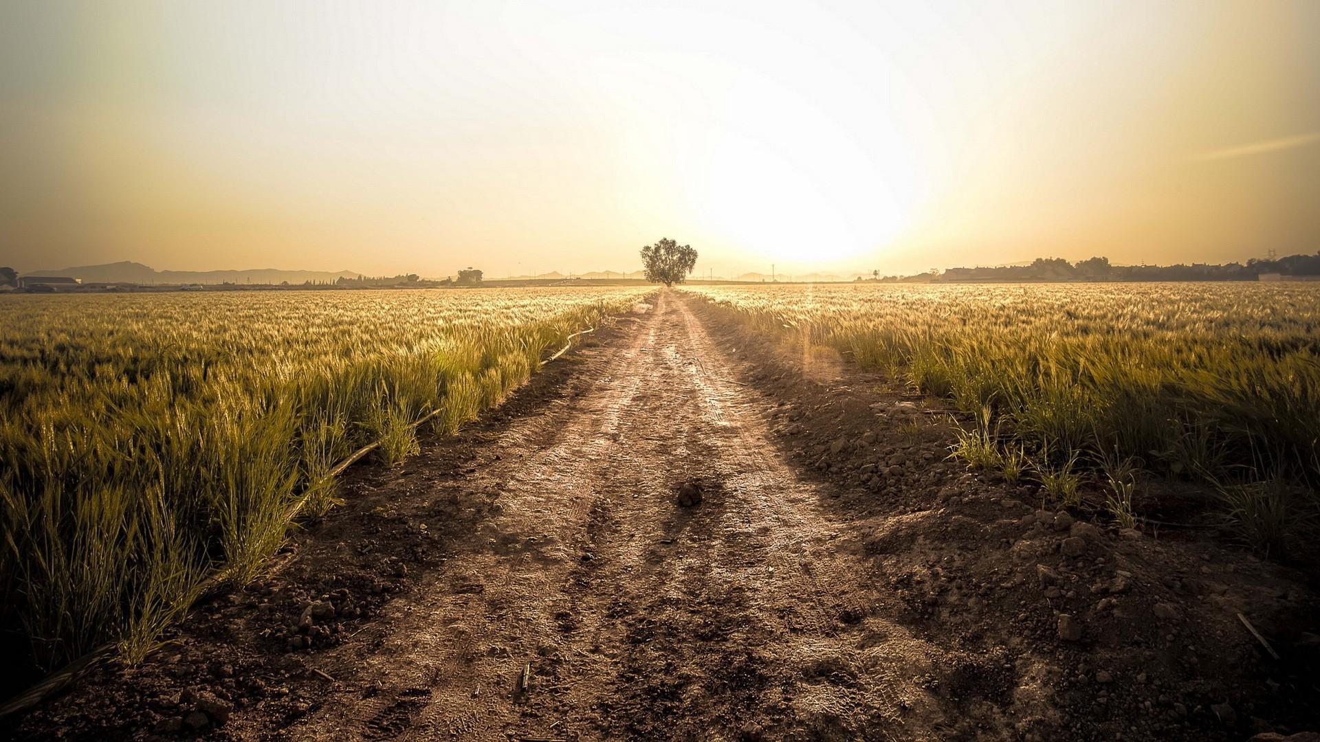 картинки пустых земель впивается ногу