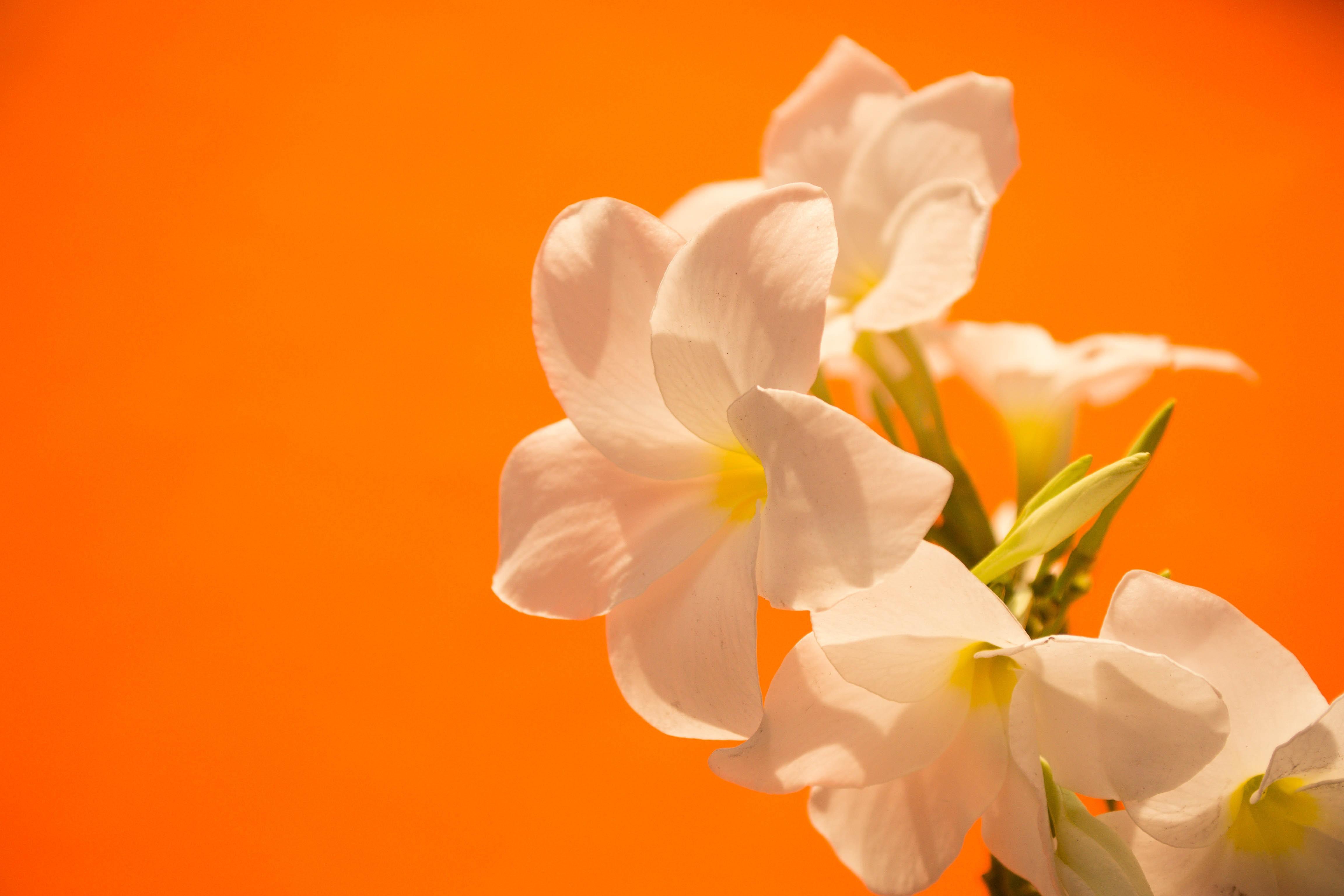 хочу картинки оранжевый фон цветы для