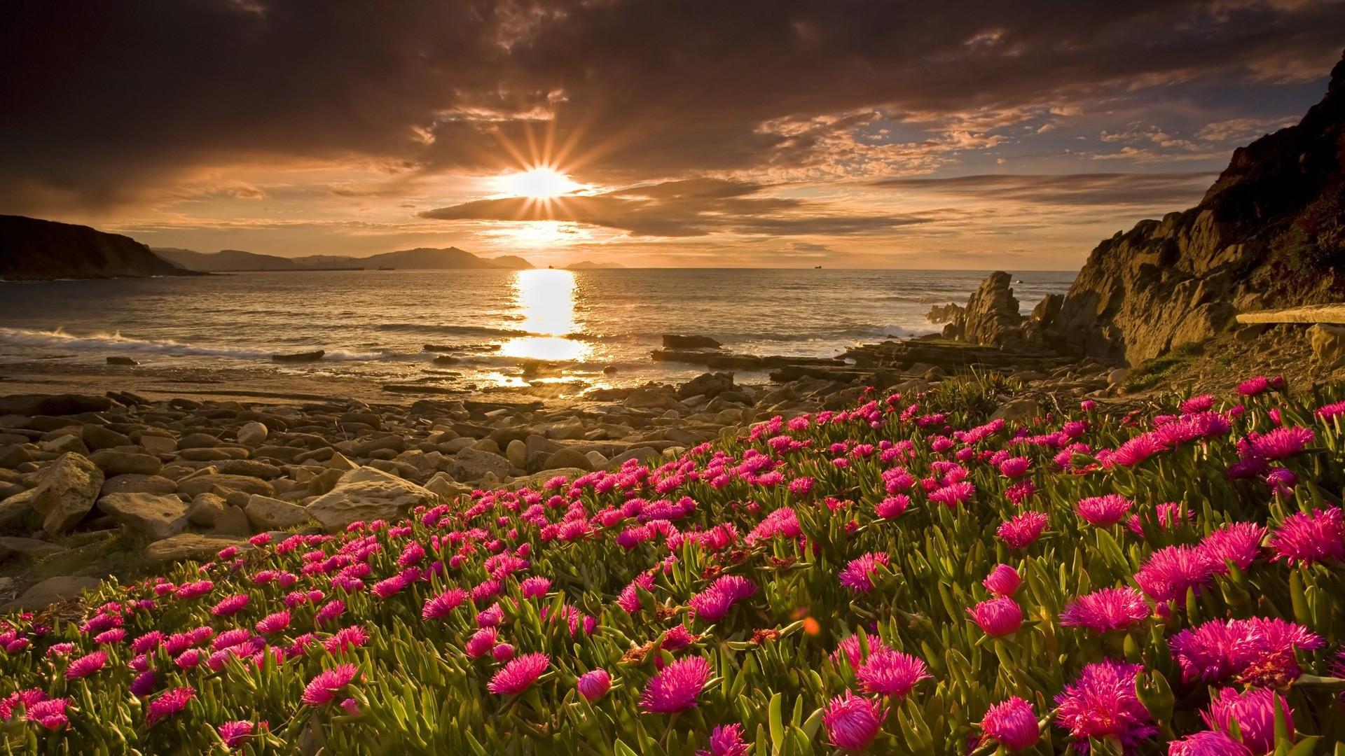 Фото природа высокого качества цветы 76