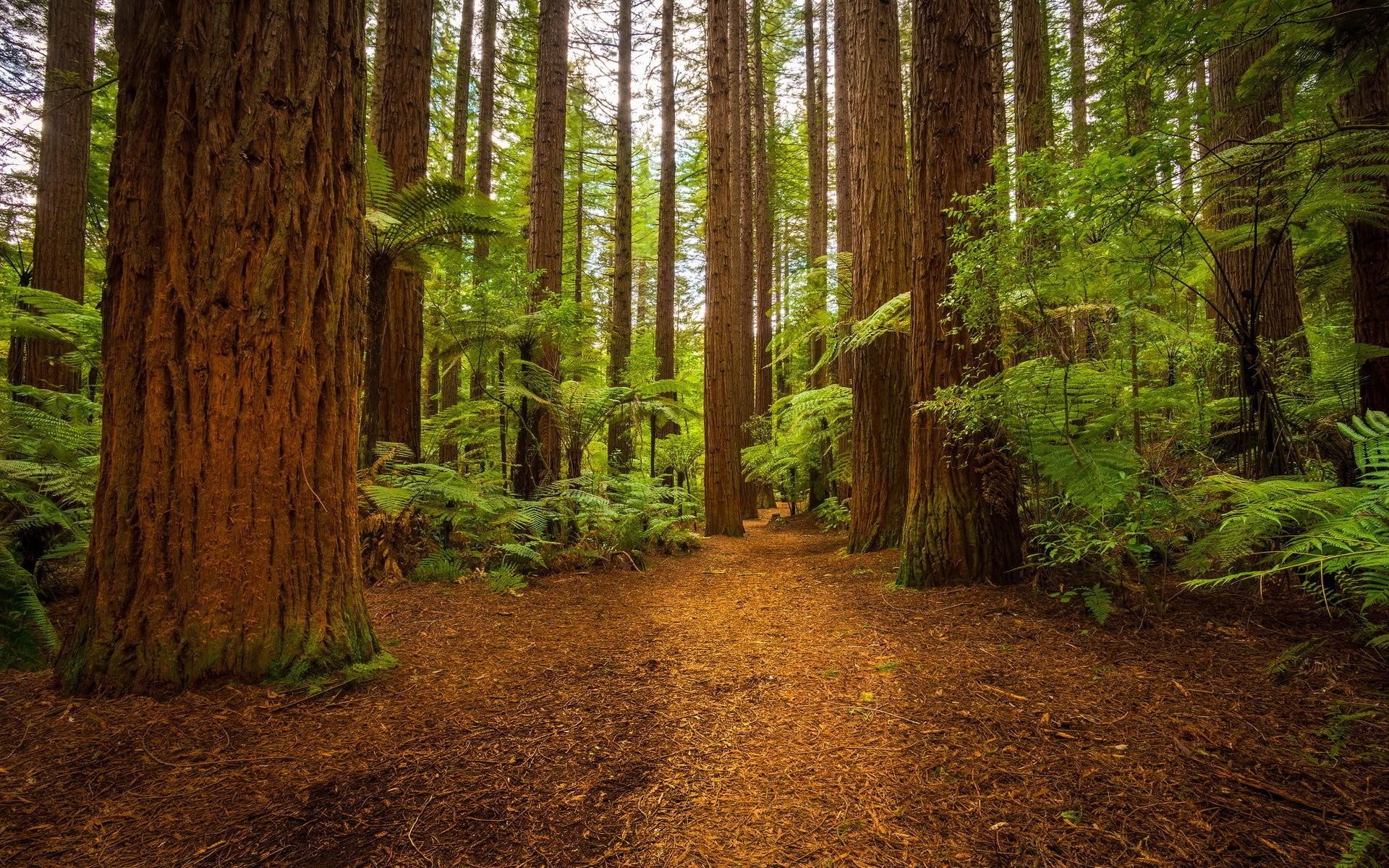 этой картинки разного леса где станете обладателем