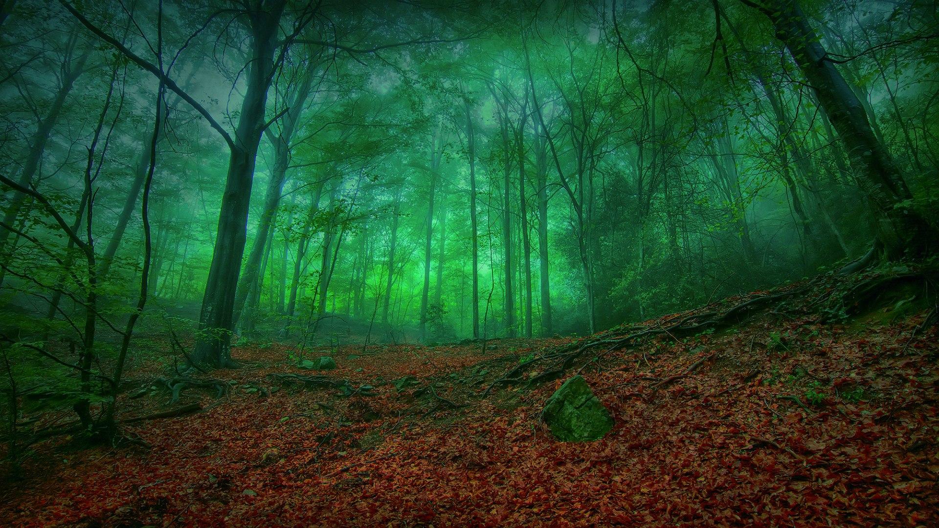 Лес крутые картинки