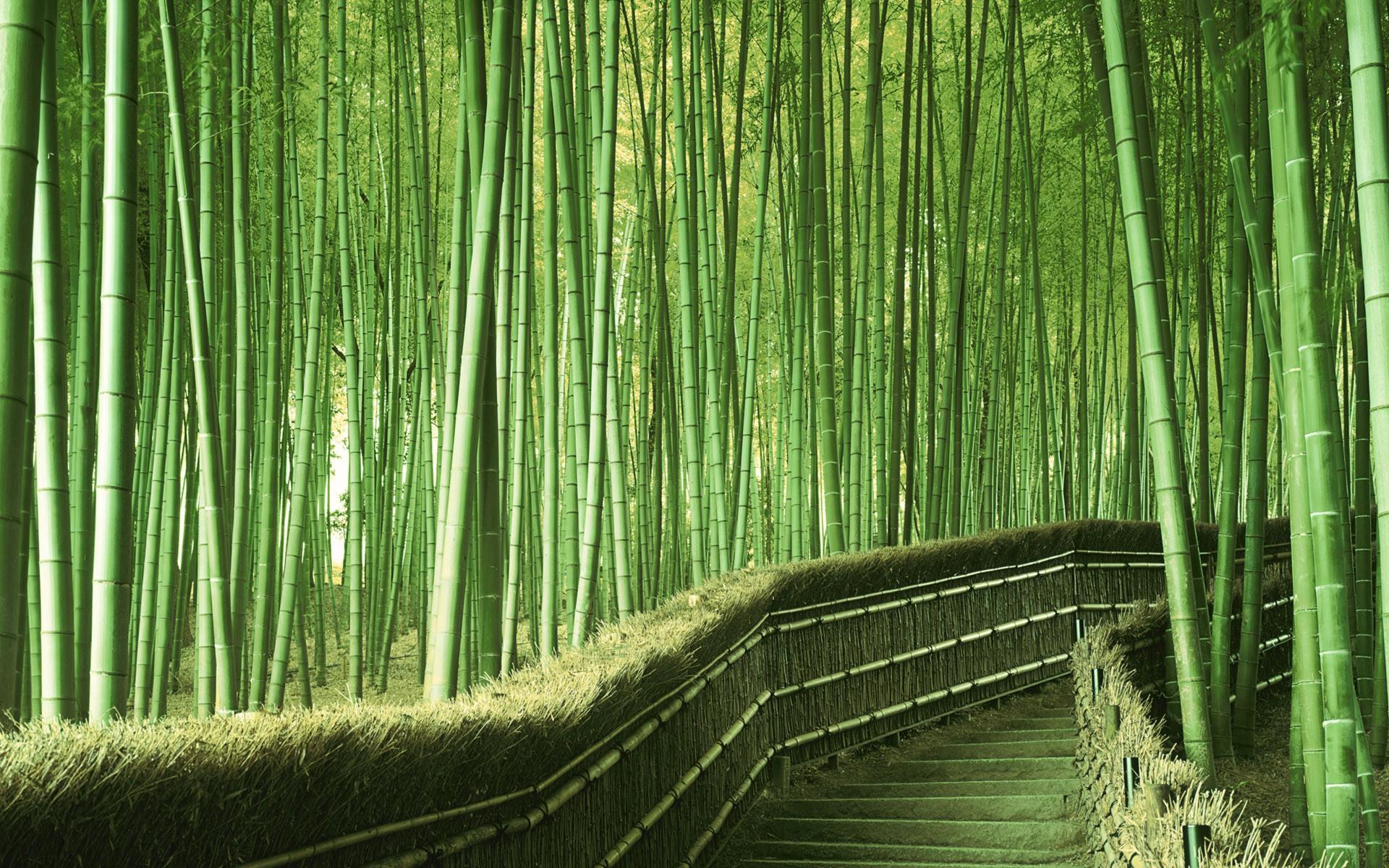 Бамбуковая роща картинка