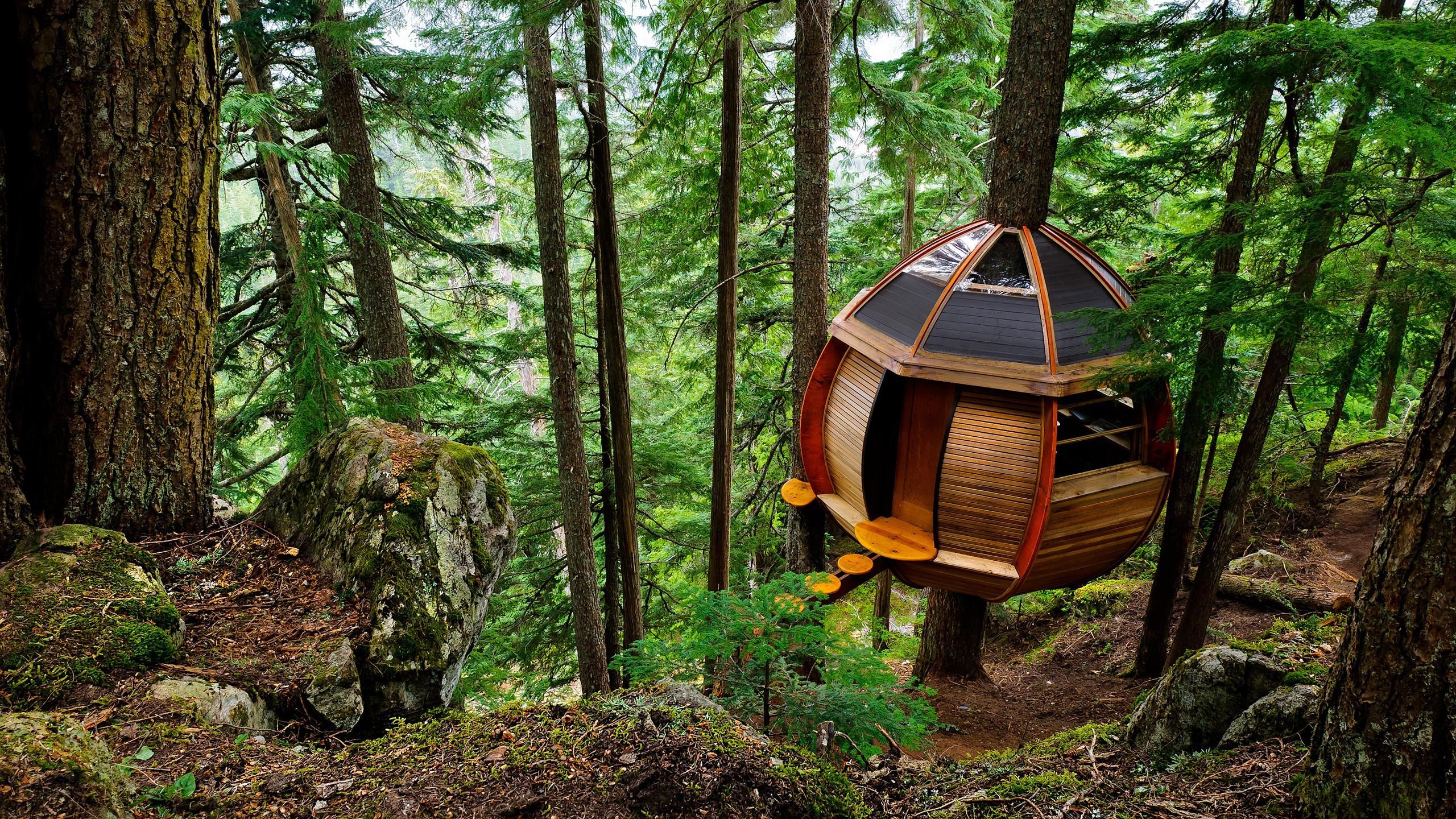 марс часто дом на дереве в лесу фото преобразует