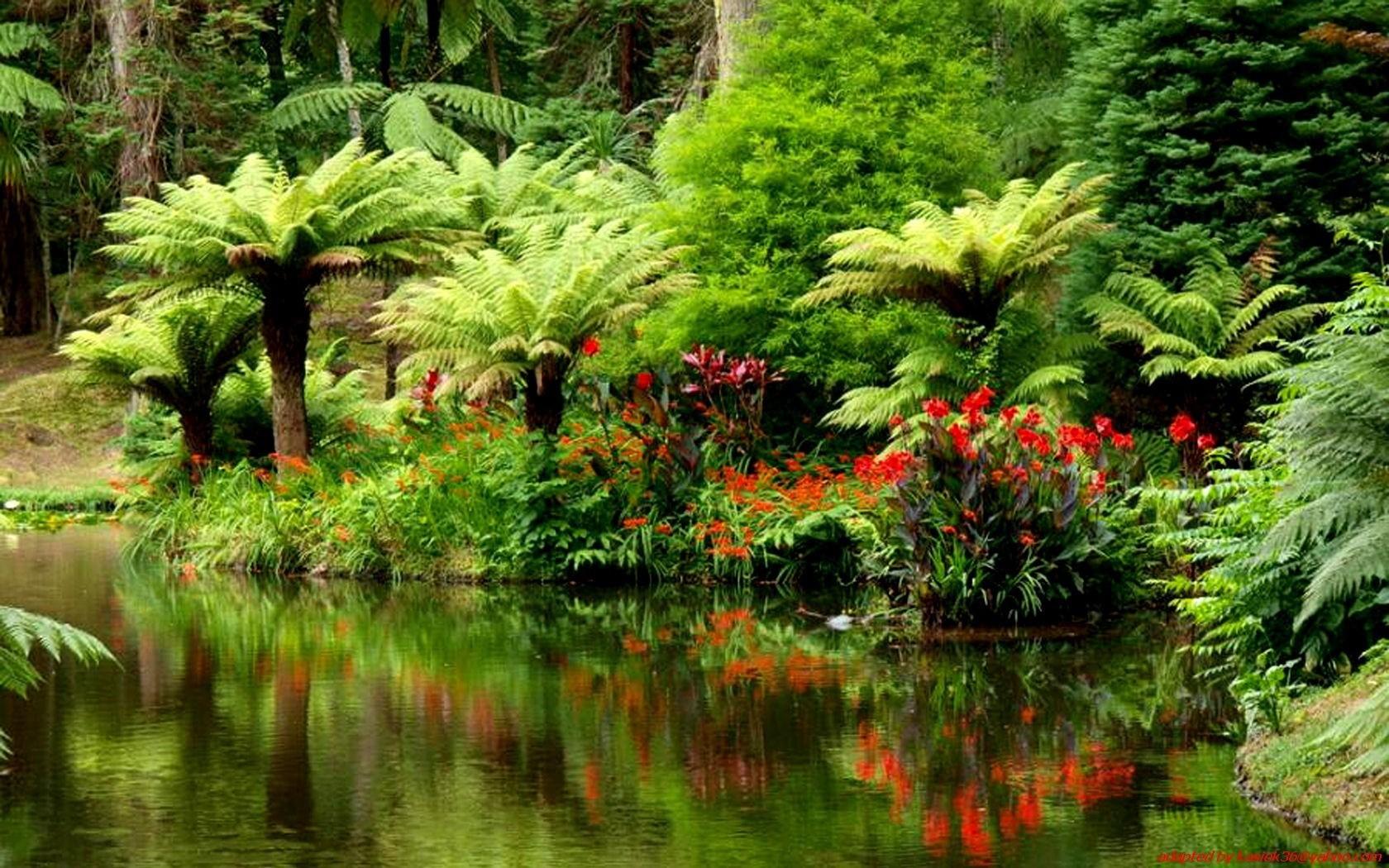 картинка тропического леса с цветами леса