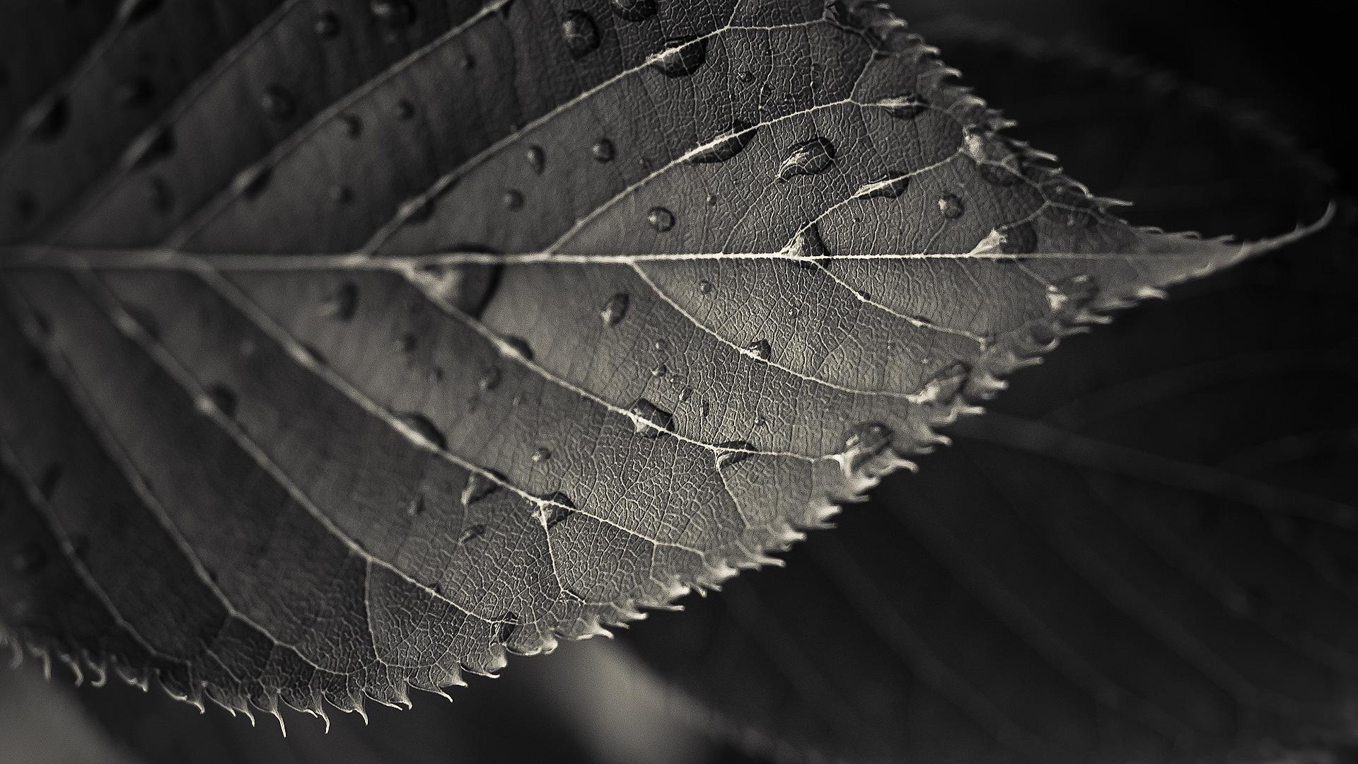 черные листья картинки когда