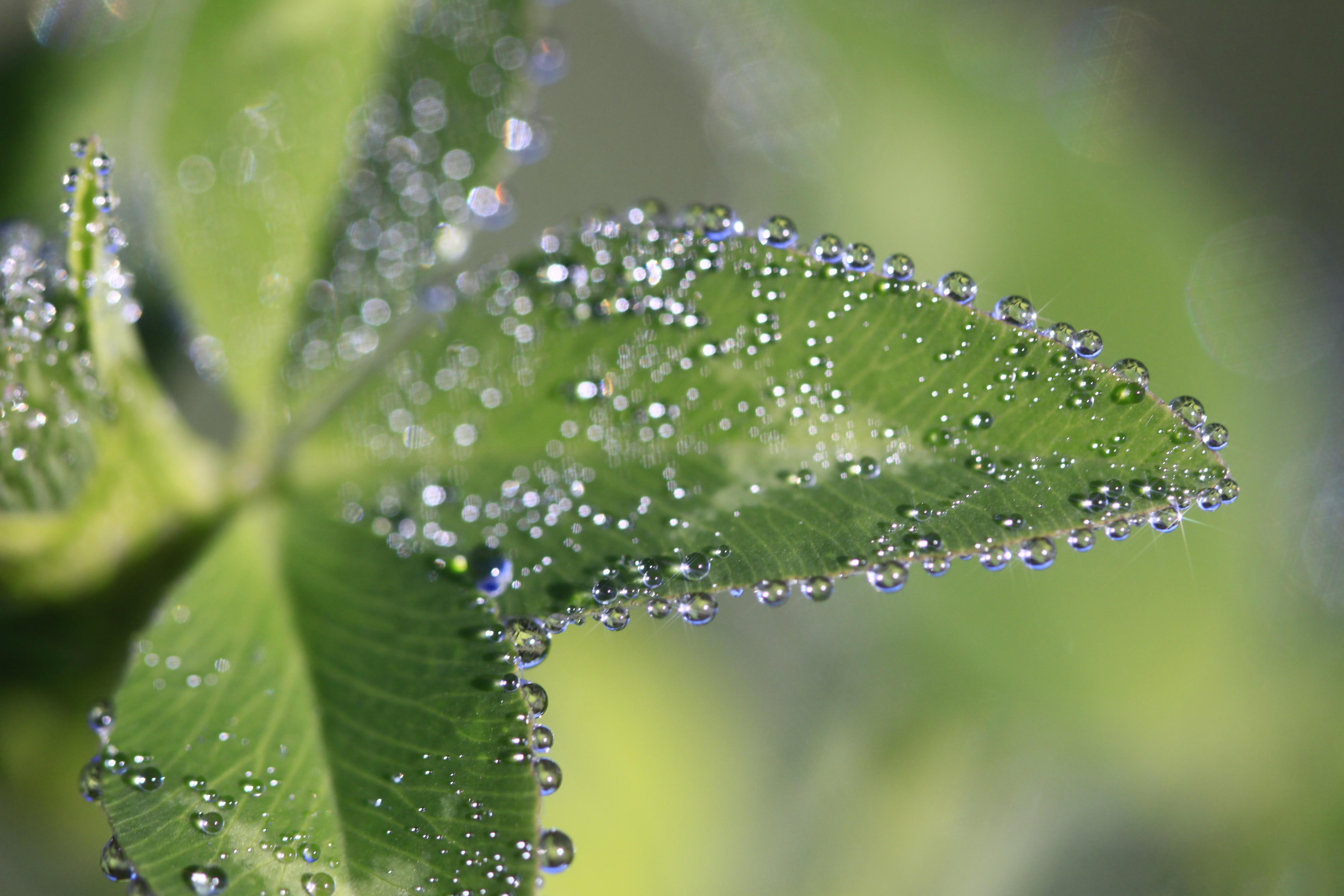 картинки с каплями на растении все люди знают