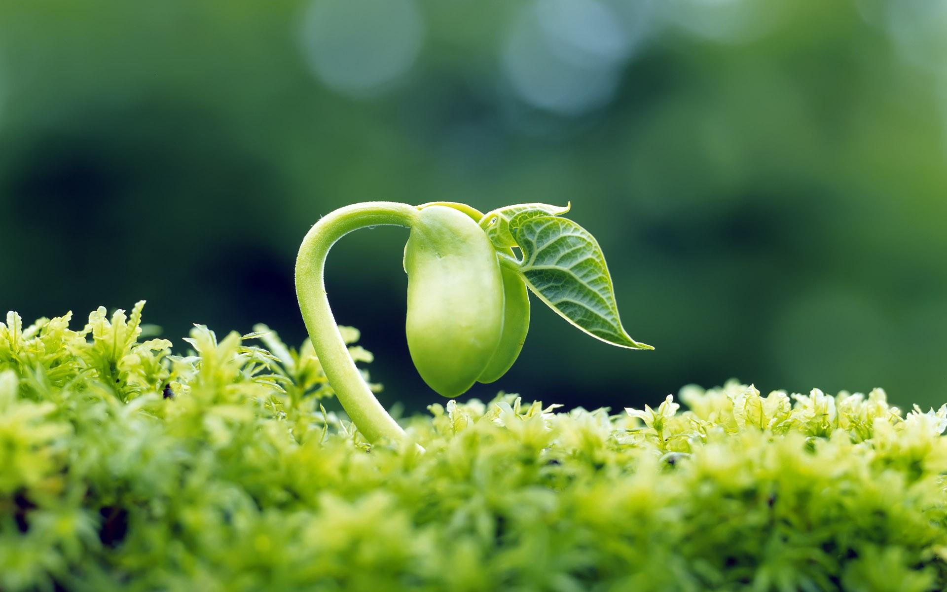 Открытка с семенами цветов, открытка