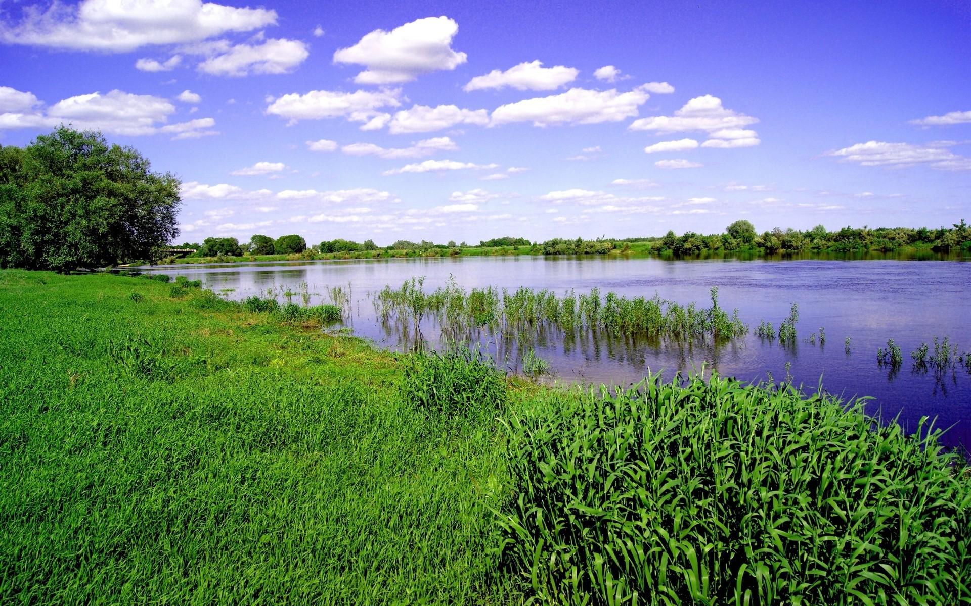 фото лужаек на берегу реки ним