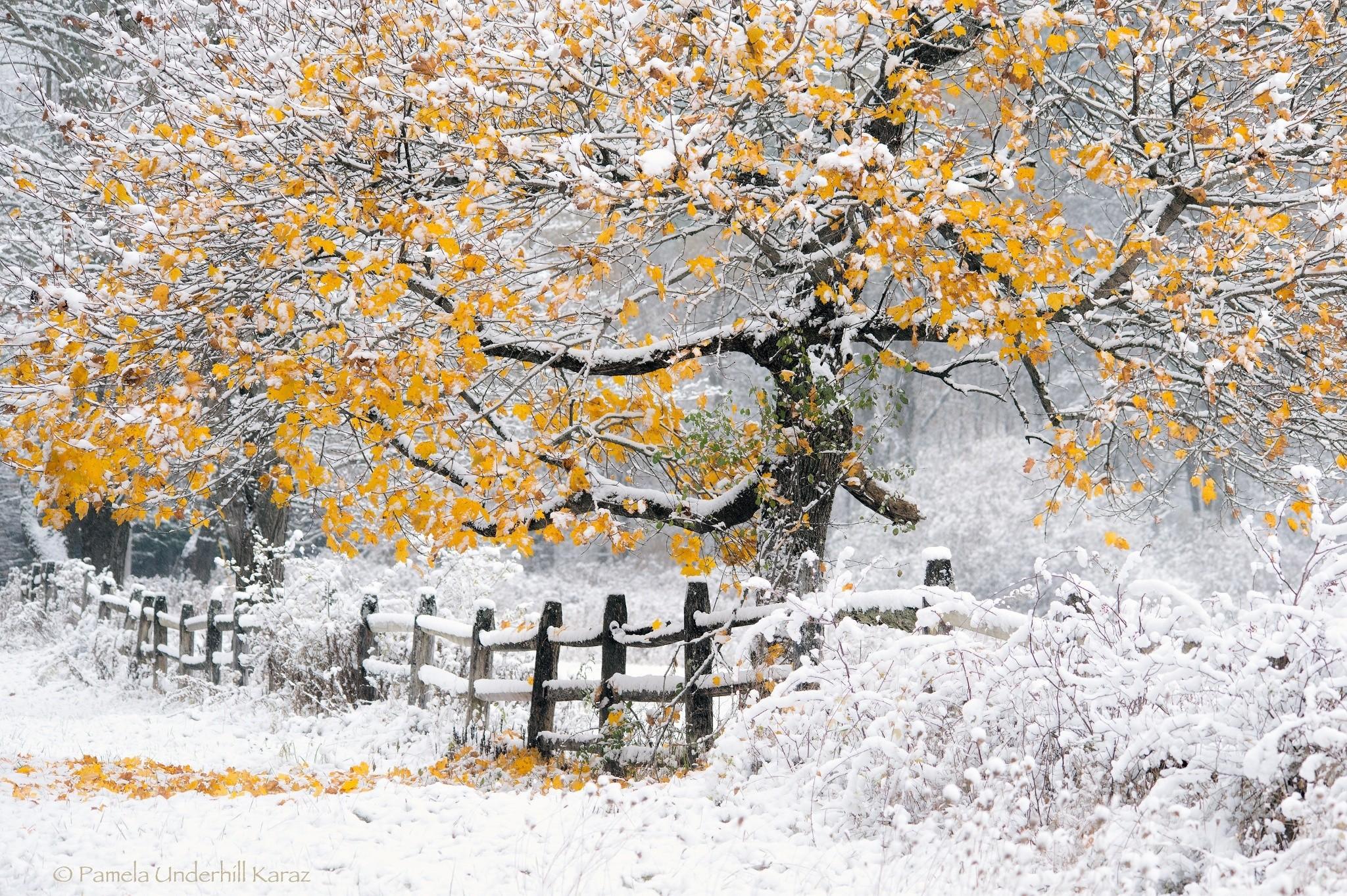 Картинки осень с первым снегом