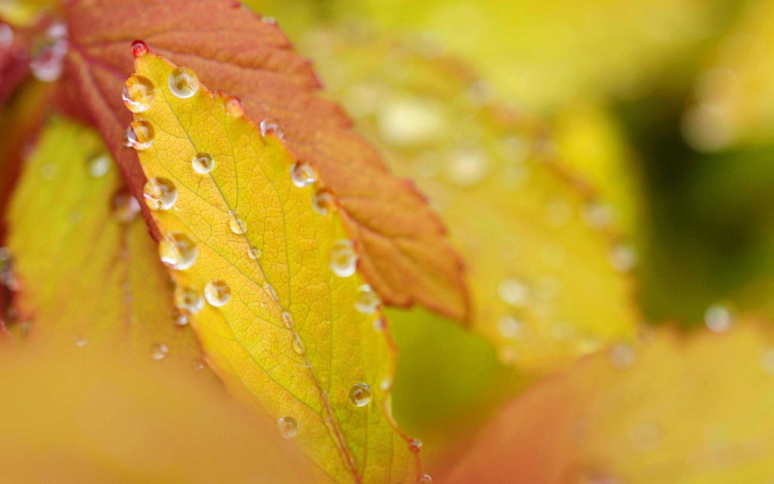 Картинки с большим разрешением осень