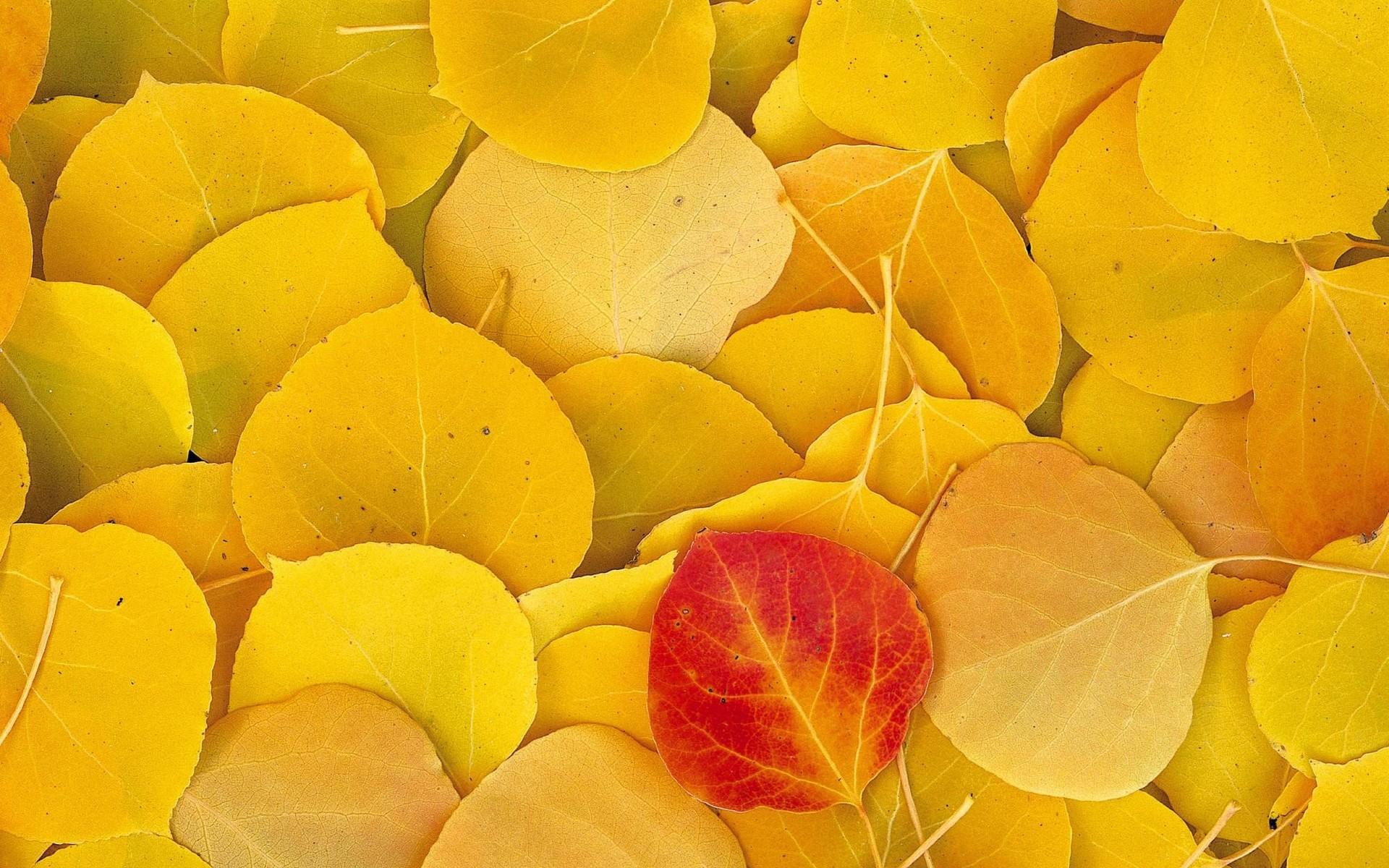 Обои на рабочий стол в желтом цвете
