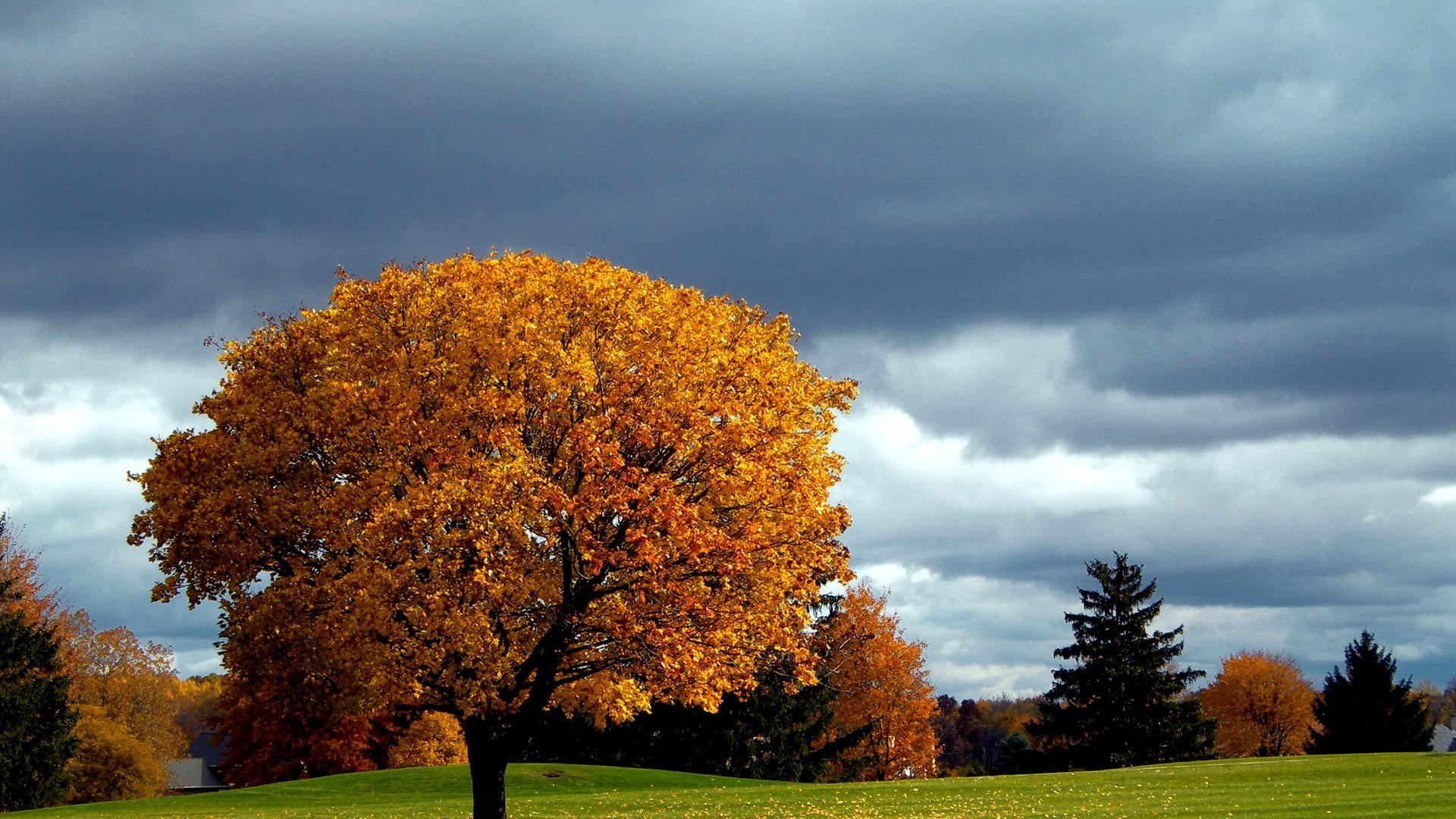Природа осень деревья картинки