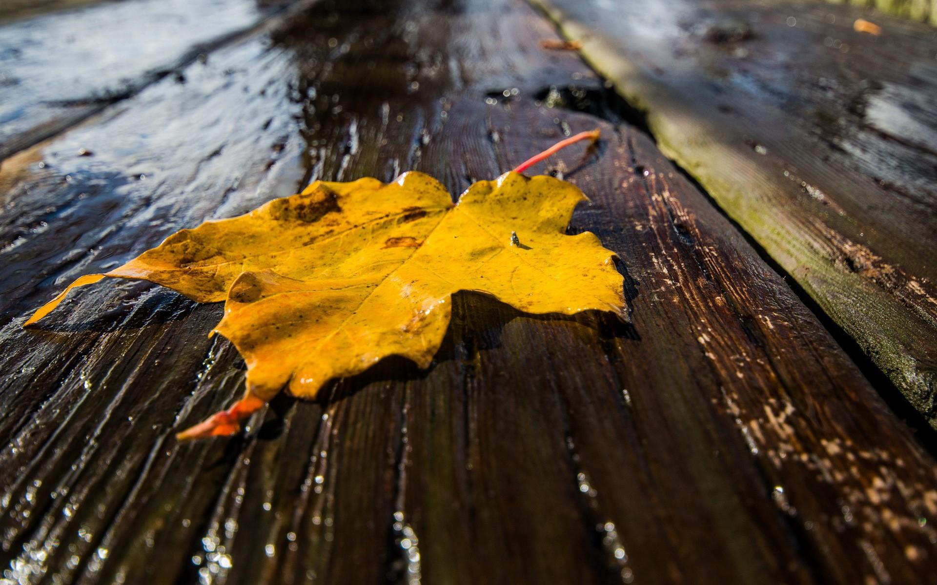 как раз картинки на рабочий стол дождливая осень масштаб