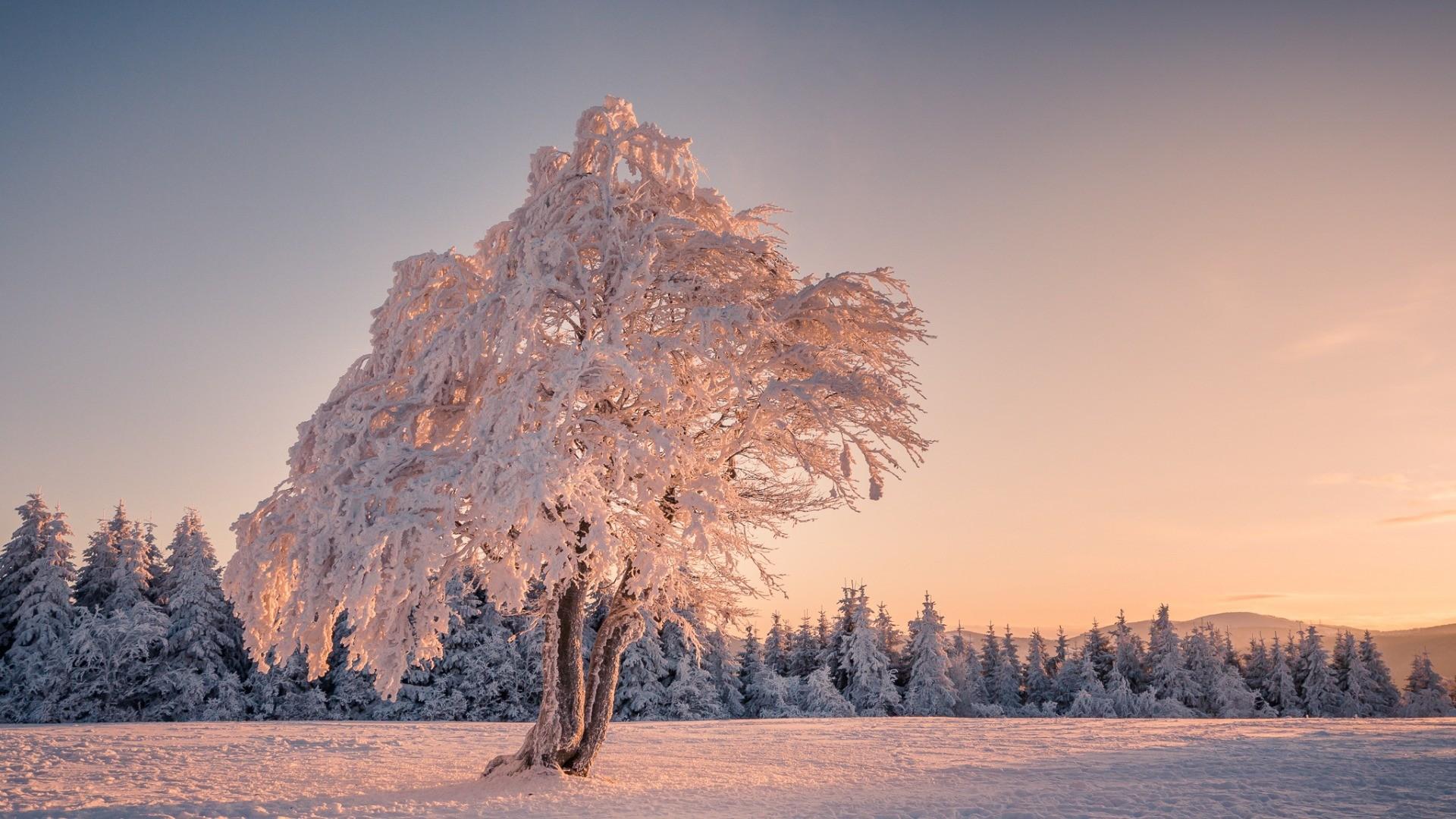 картинки заснеженного леса деревья в инее простой вкусный