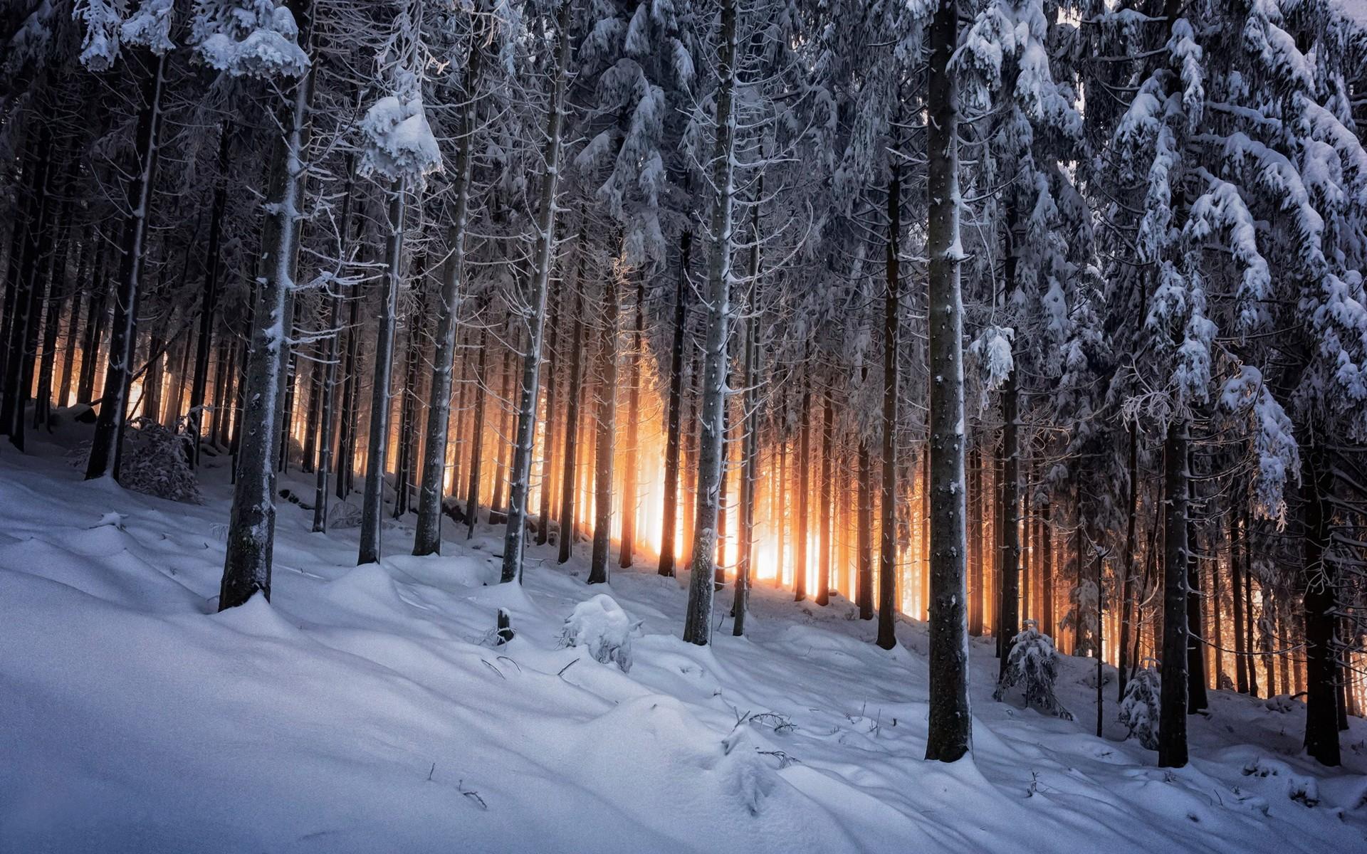 фото зимнего леса в высоком качестве стен
