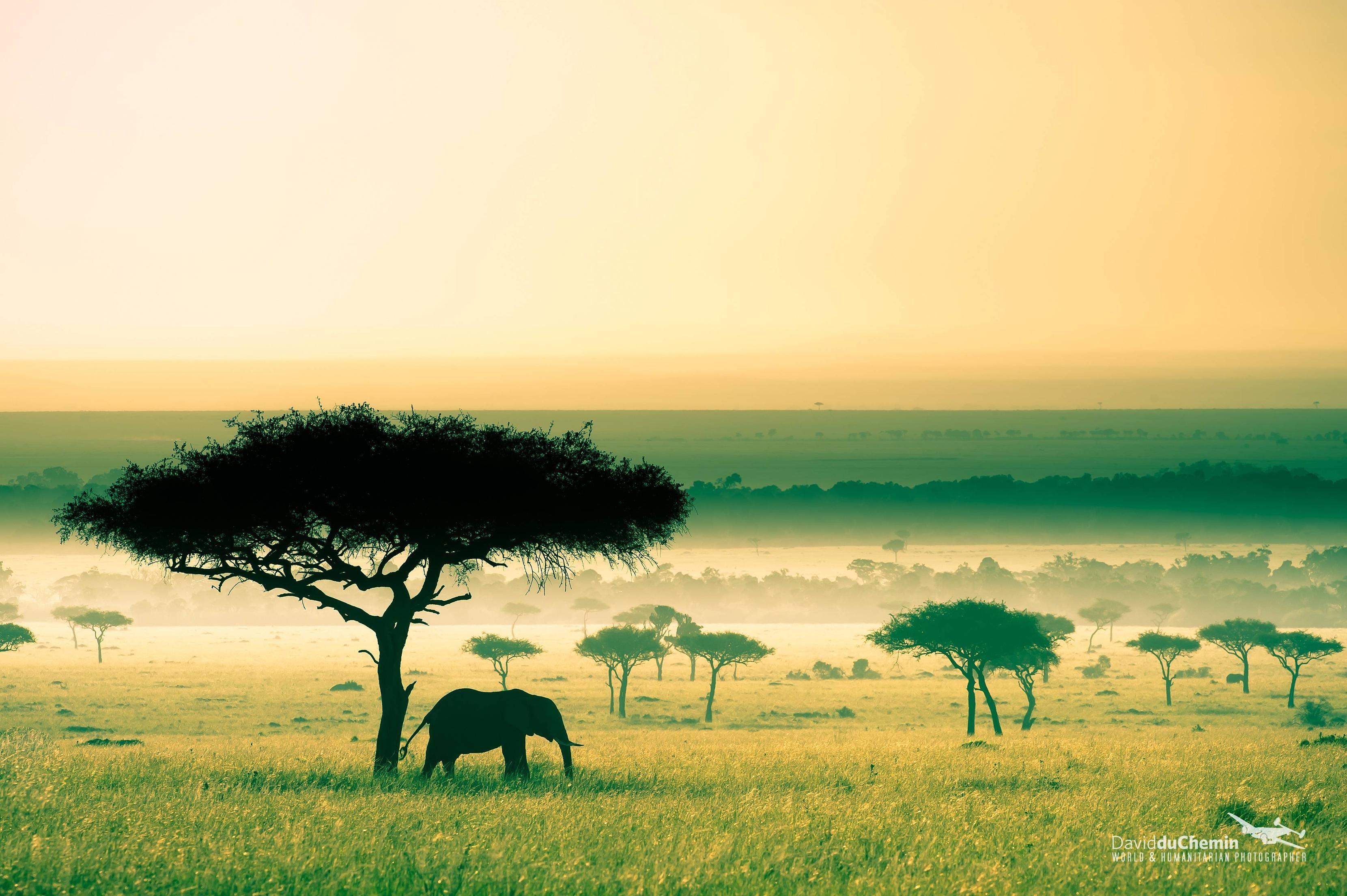 работала картинка природа африки без животных интервью актриса назвала