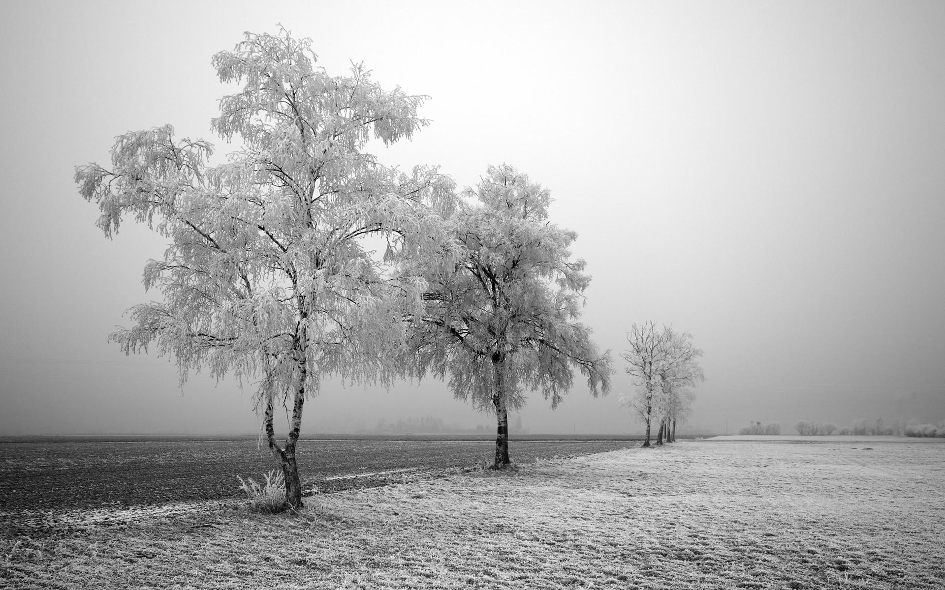 зимние деревья фото черно белые здесь