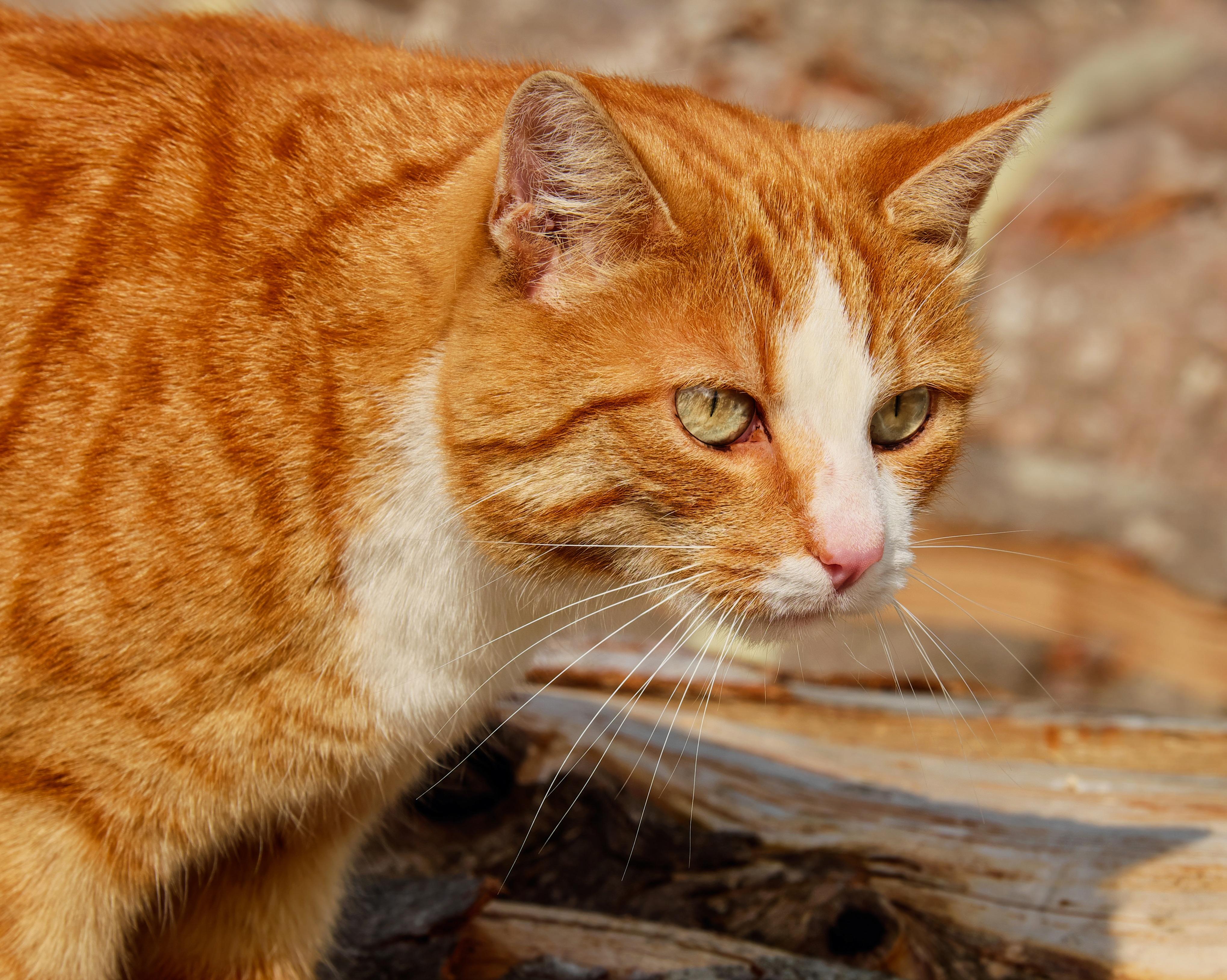 wild world cat stevens