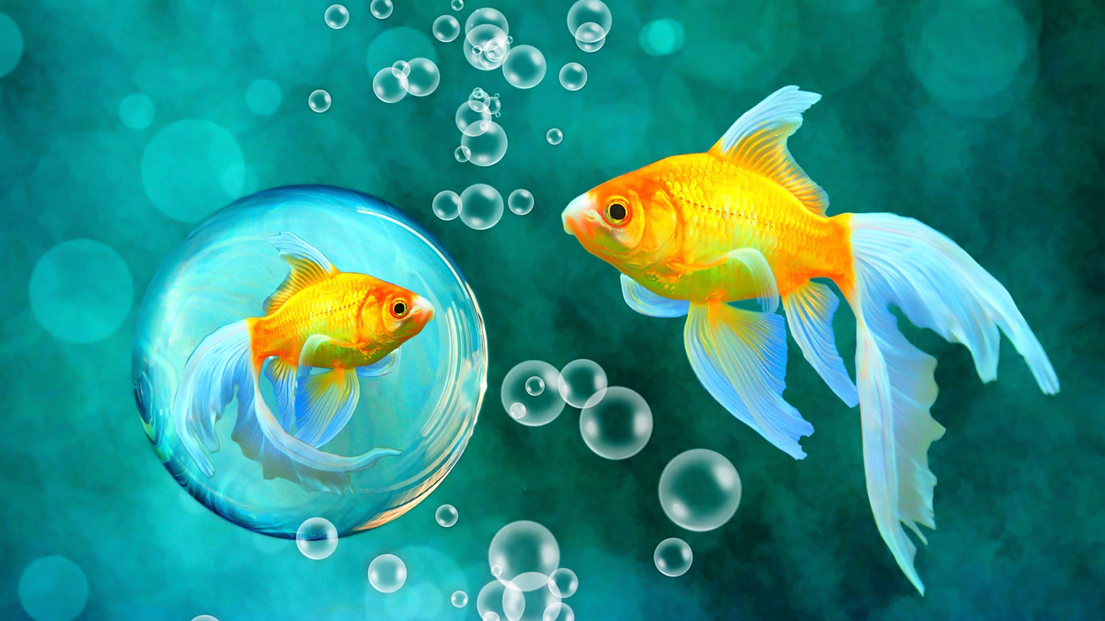 Обои На Рабочий Стол Рыбы