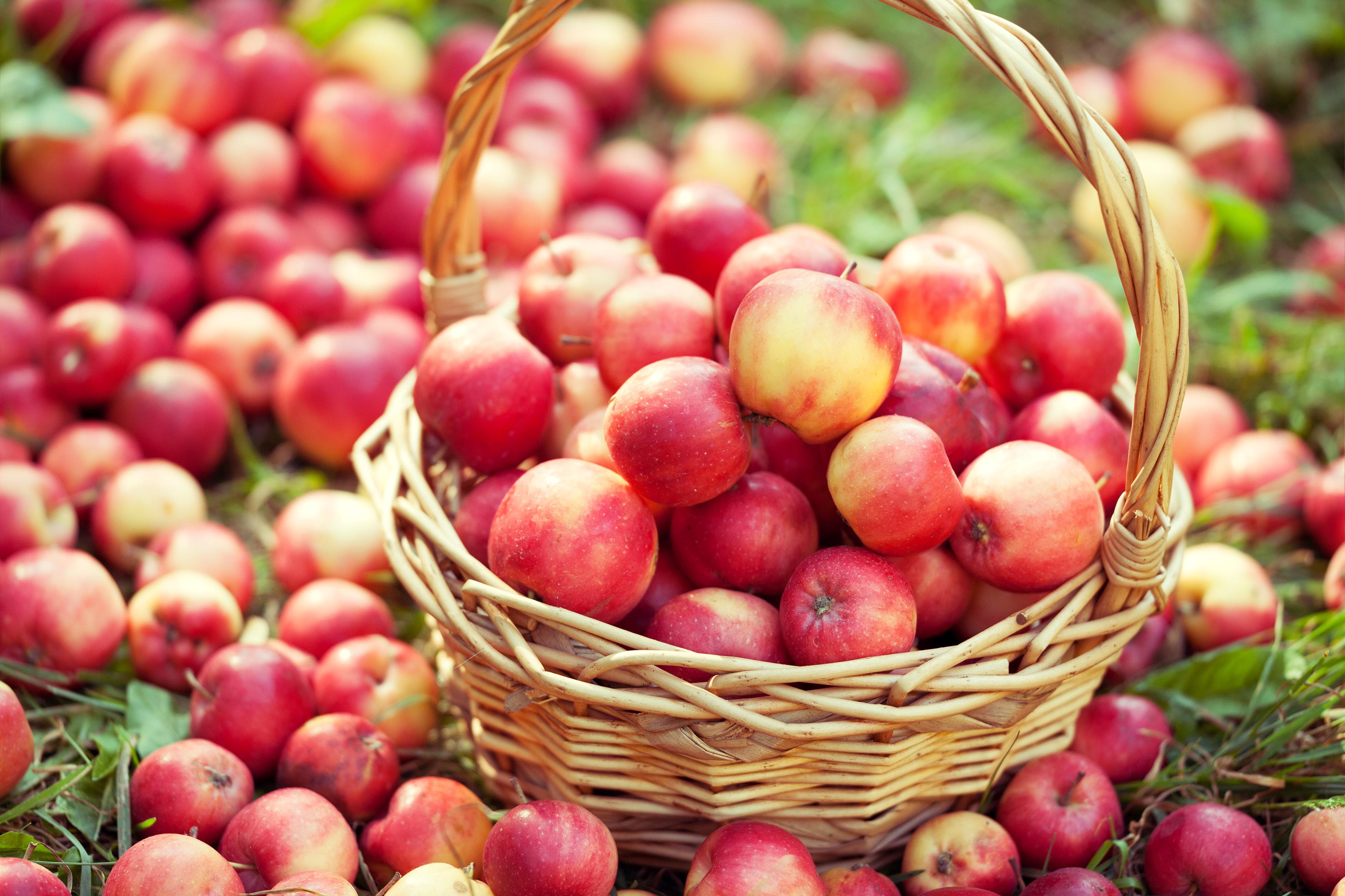 Картинки яблоки красивые