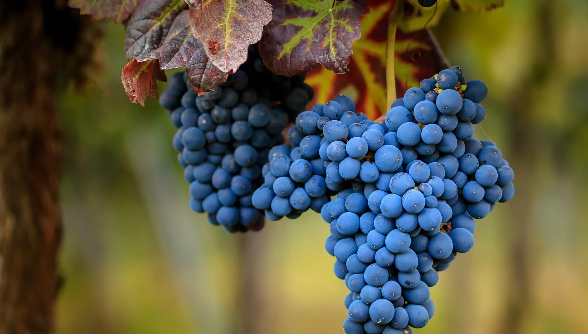 Картинки про виноград, 81+ красивые