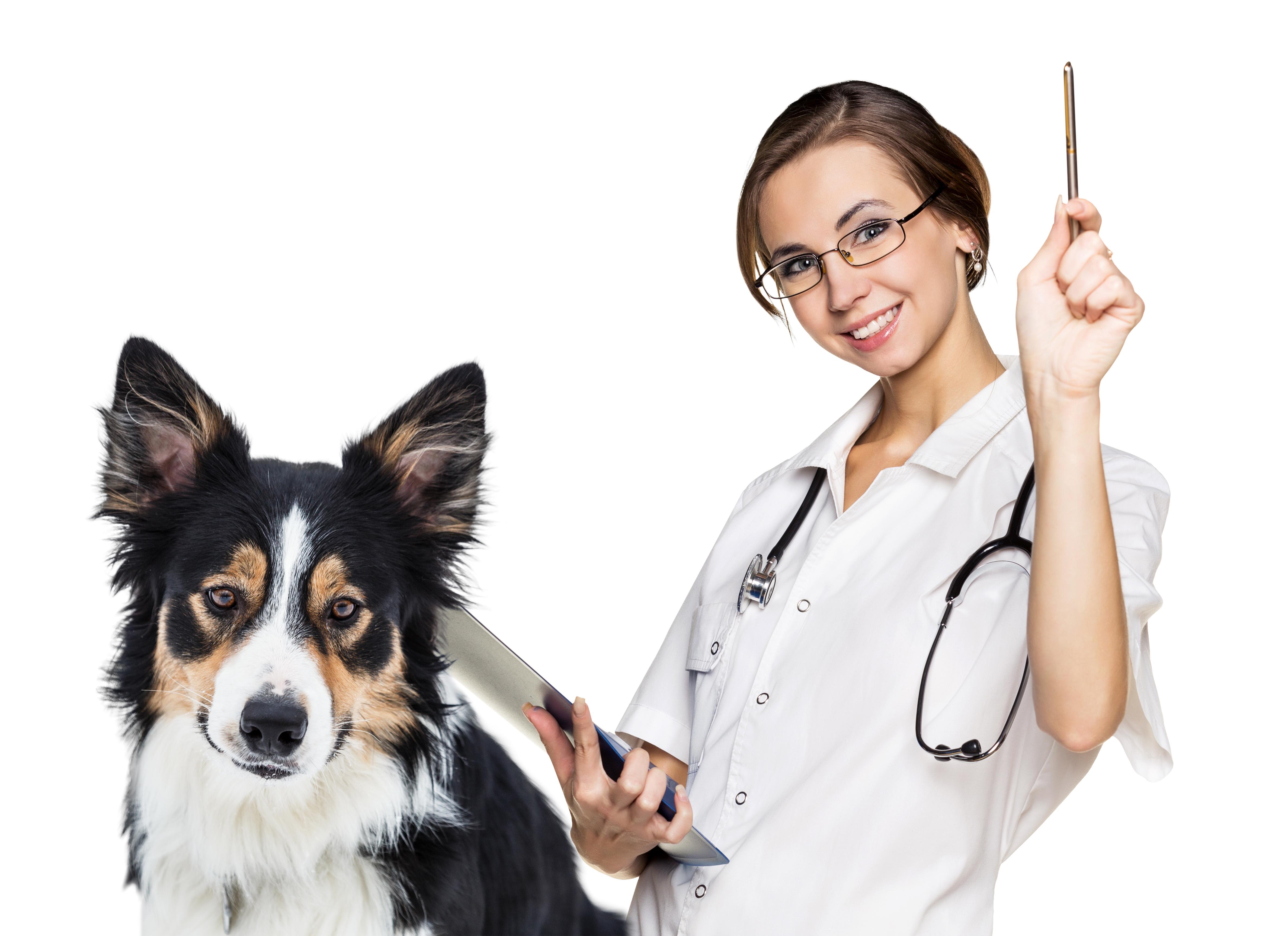 употребляемые картинка доктора для животных первый