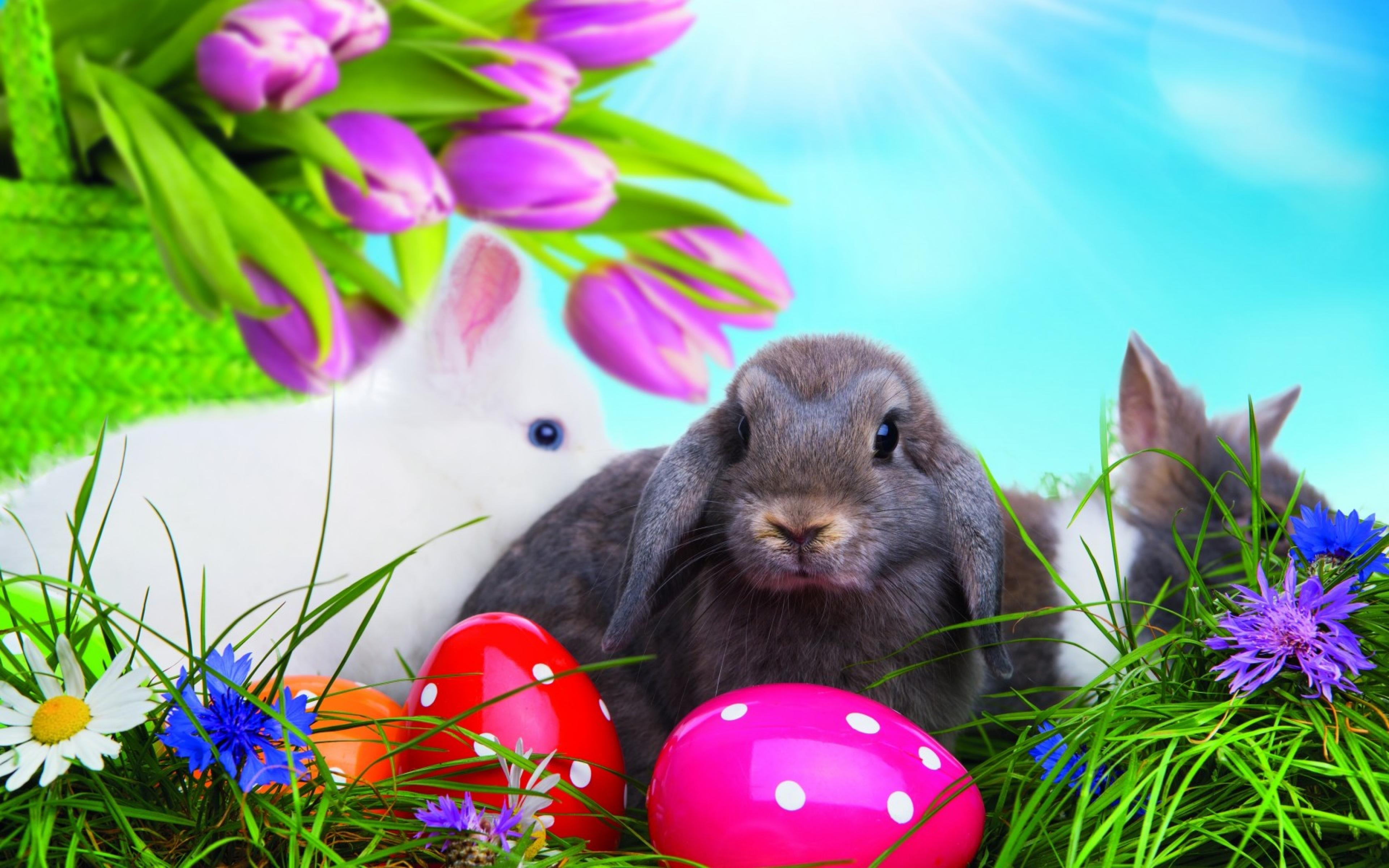 Тебе что, пасхальный кролик картинки красивые на телефон