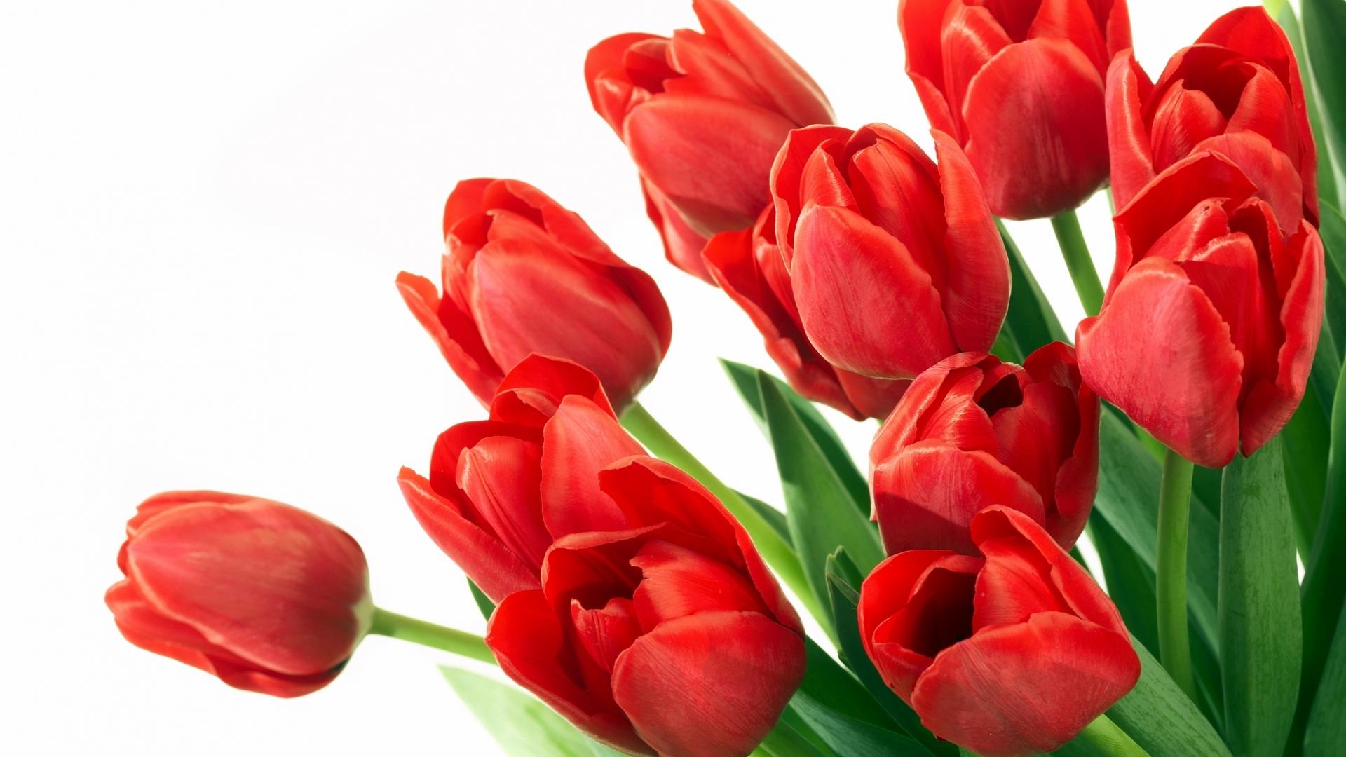 Открытки тюльпанов в хорошем качестве