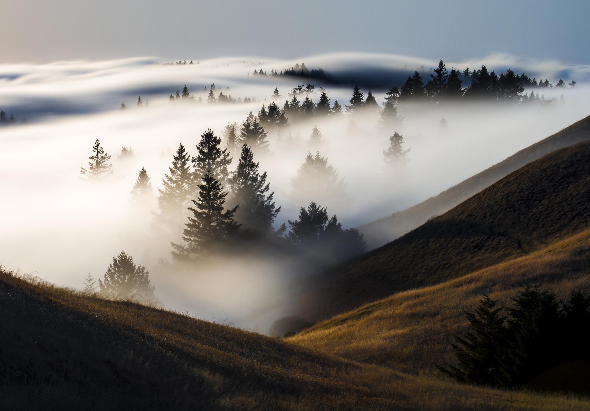 Картинки, картинка тумана в природе