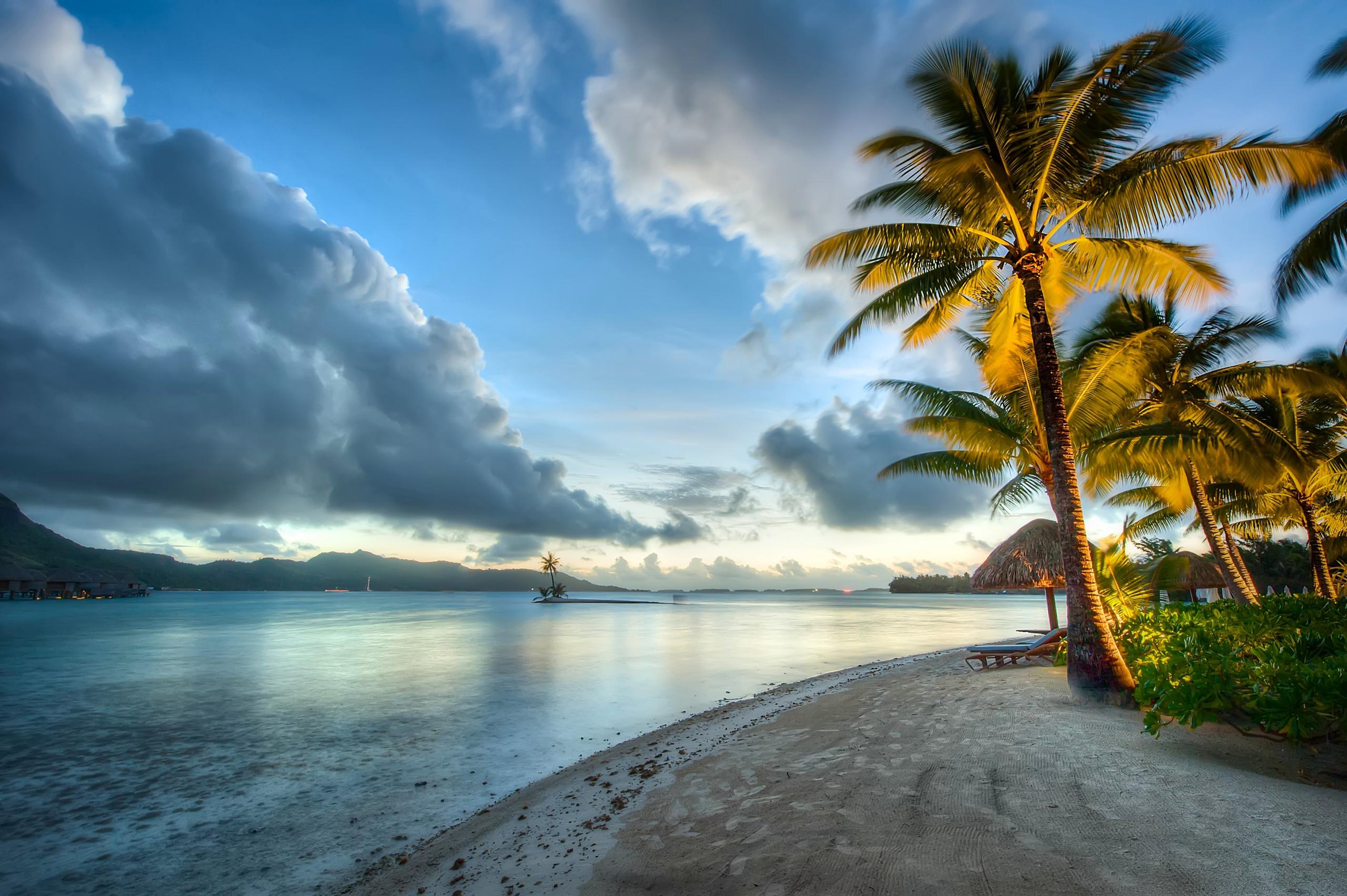 берег океана с пальмами фото всячески
