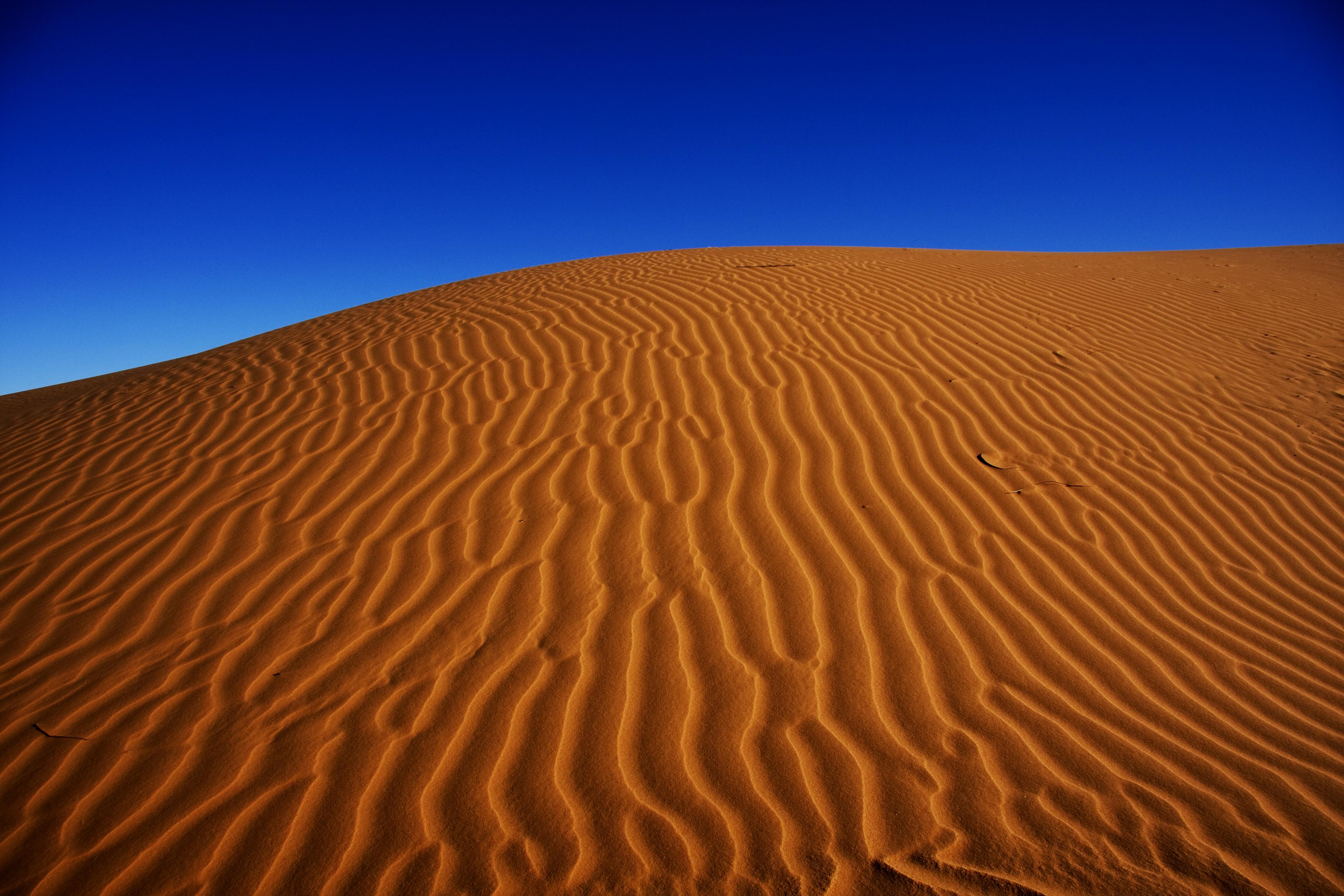 матового поиск пустыня картинки открытый грунт