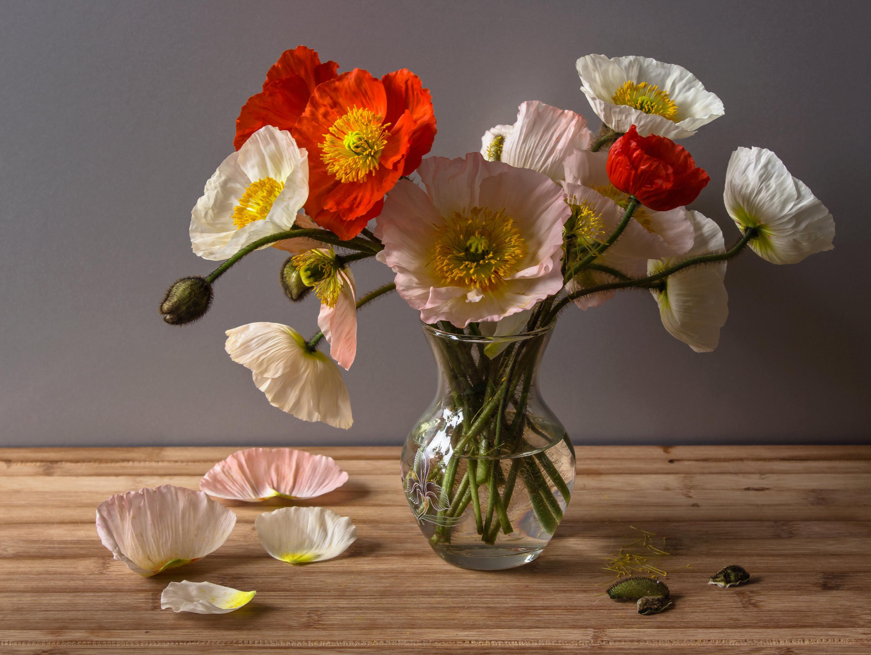 Красивые цветы фото букеты с маками