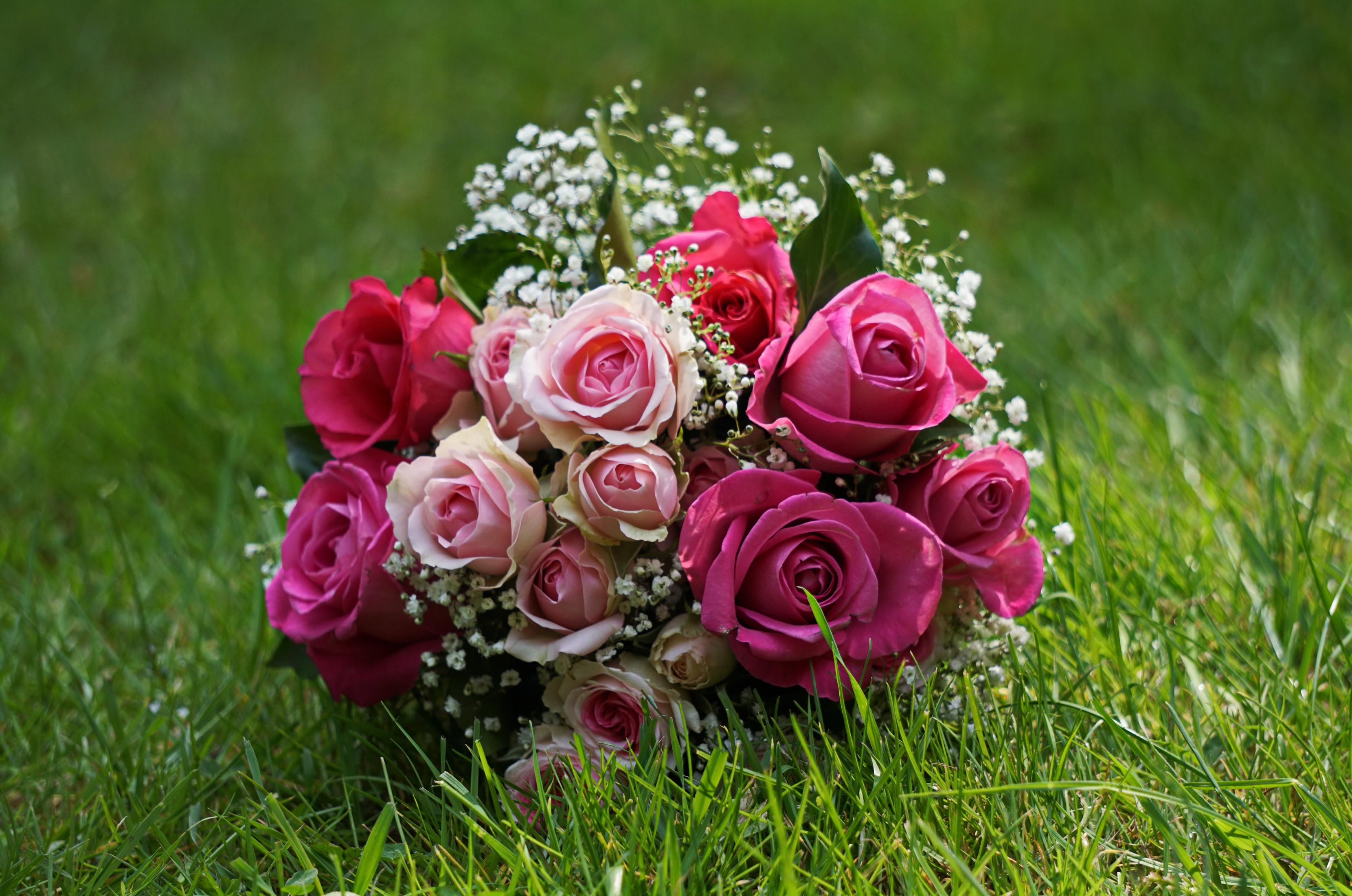 вместо физической букет цветов в картинках роз на рабочем столе рождением