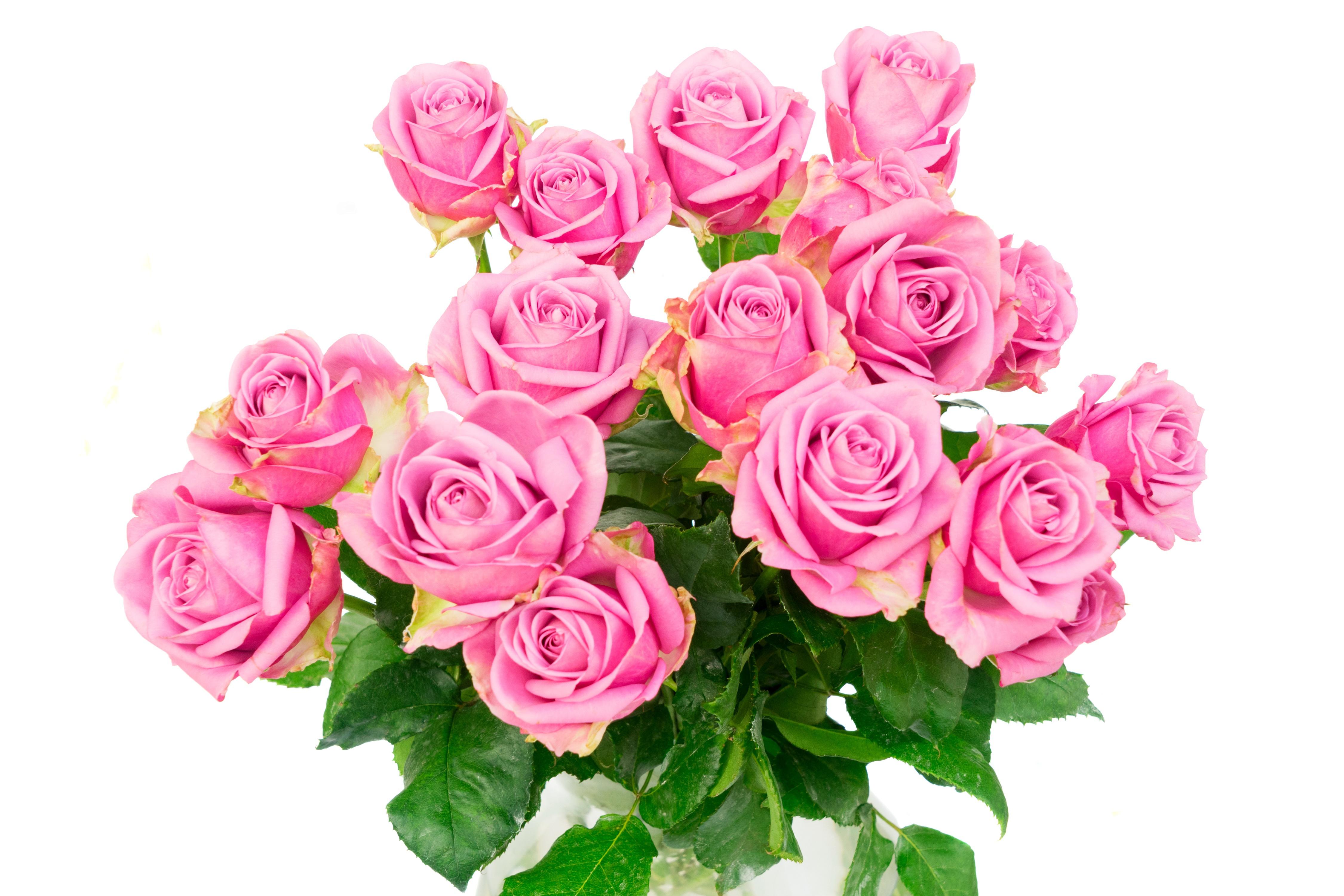 Большие открытки розовые розы