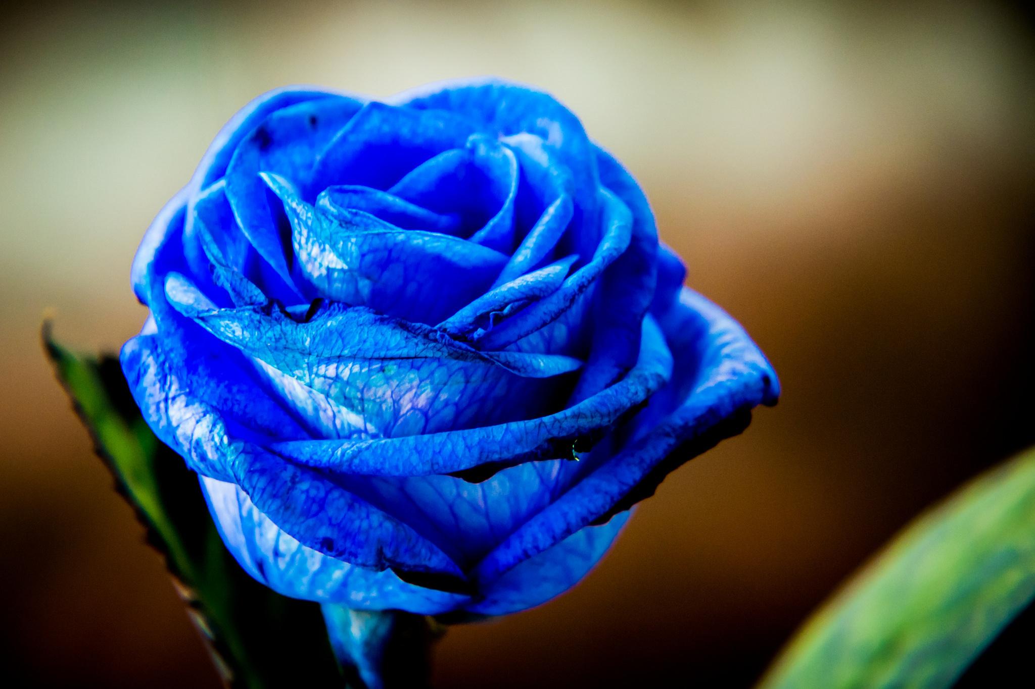 некоторых картинки синих оттенков ленина